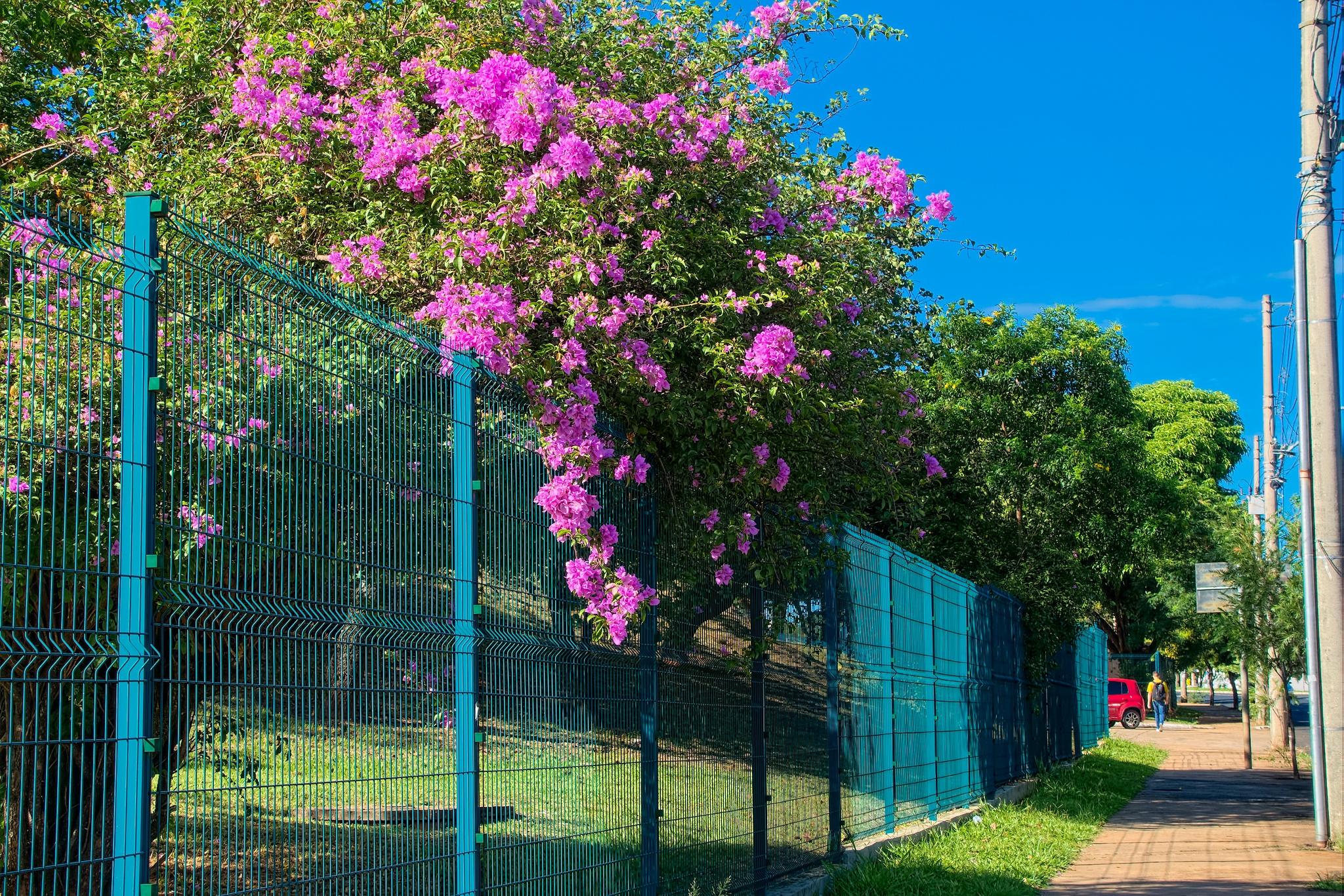 A blue fence by Luiz Curcino