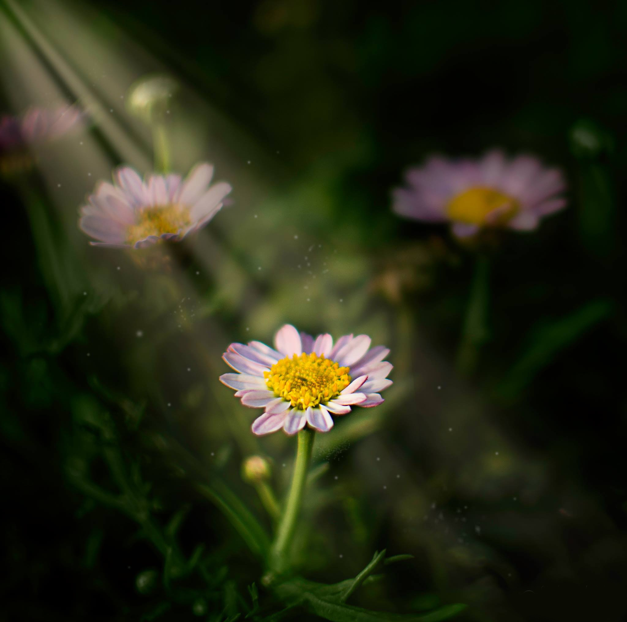 Ray of Light by Muhannad Salem