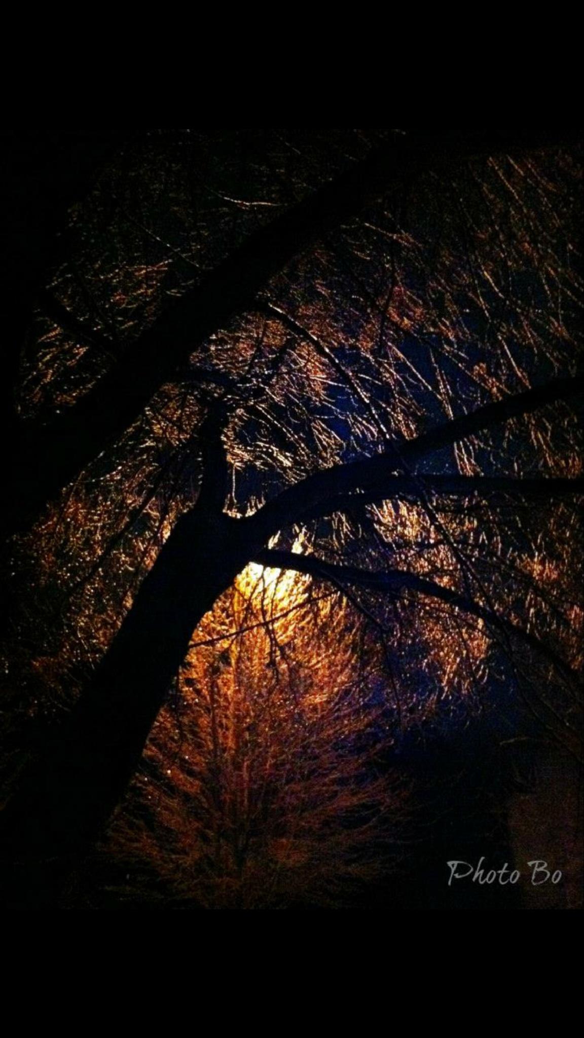 Frozen in light  by SandeBodande