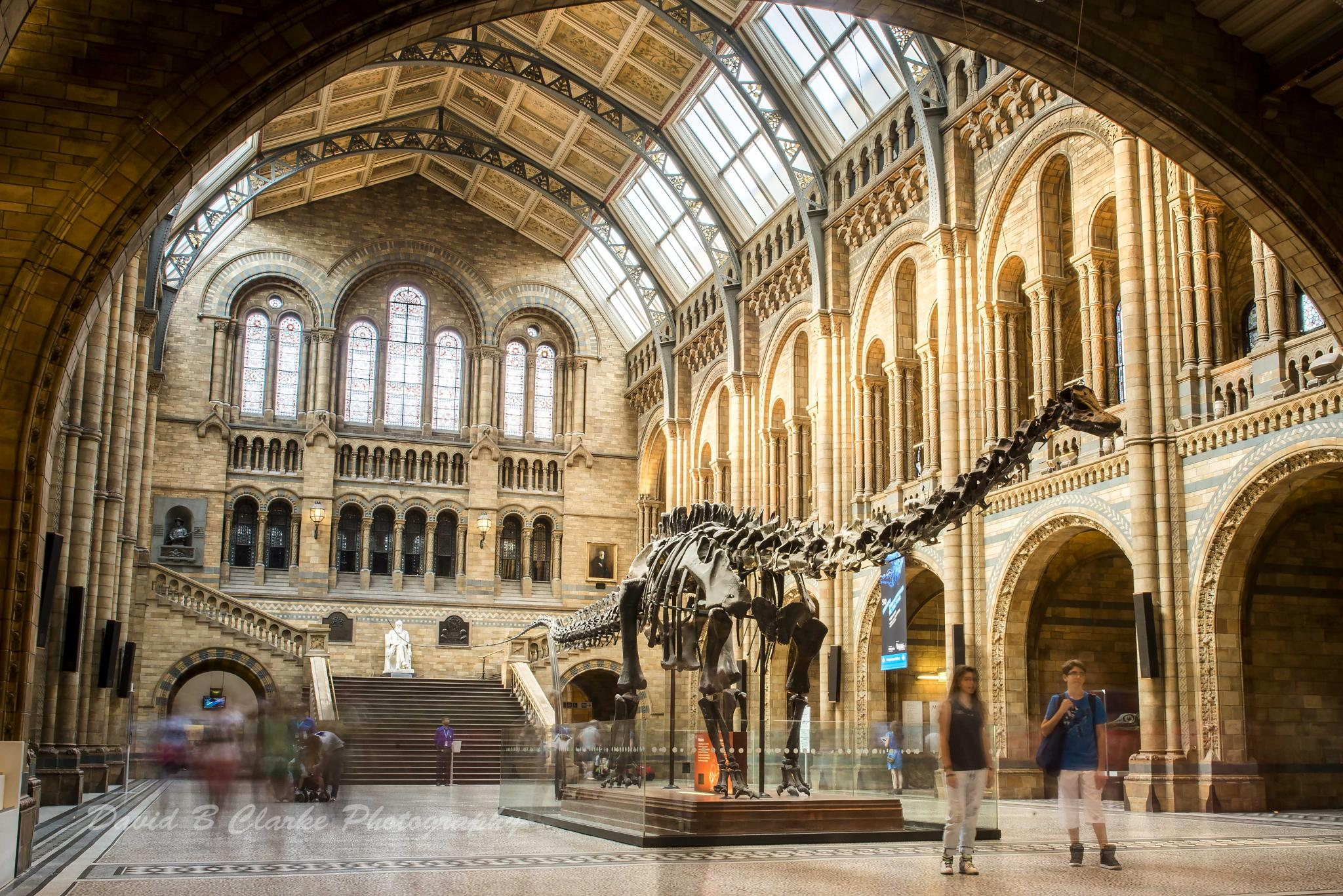Natural History Museum London by dc_dundalk