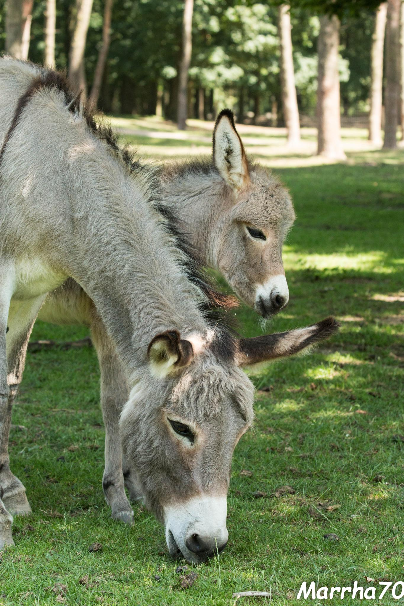 Donkey and foal by marrha70