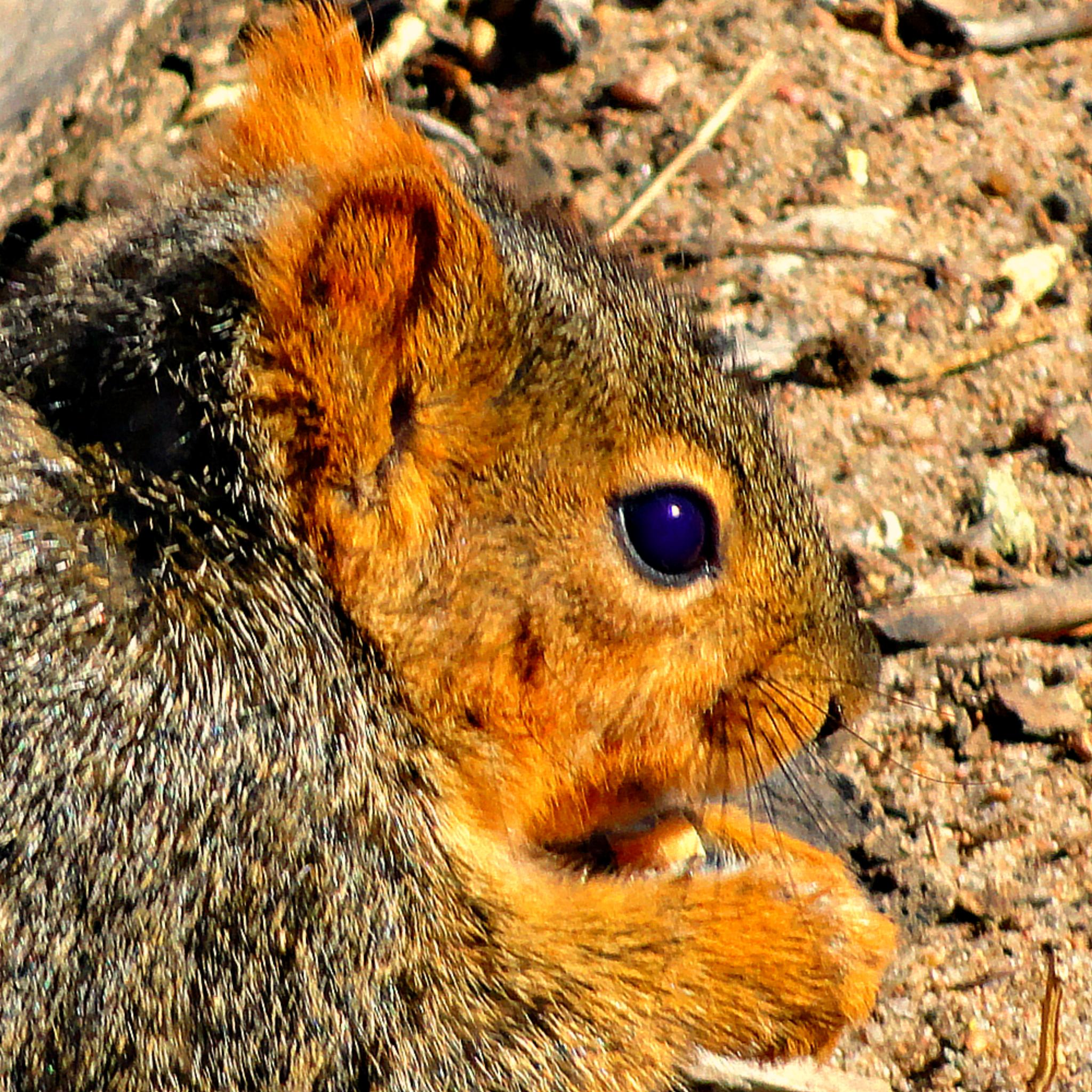 Random Squirrel by Lione'sLens