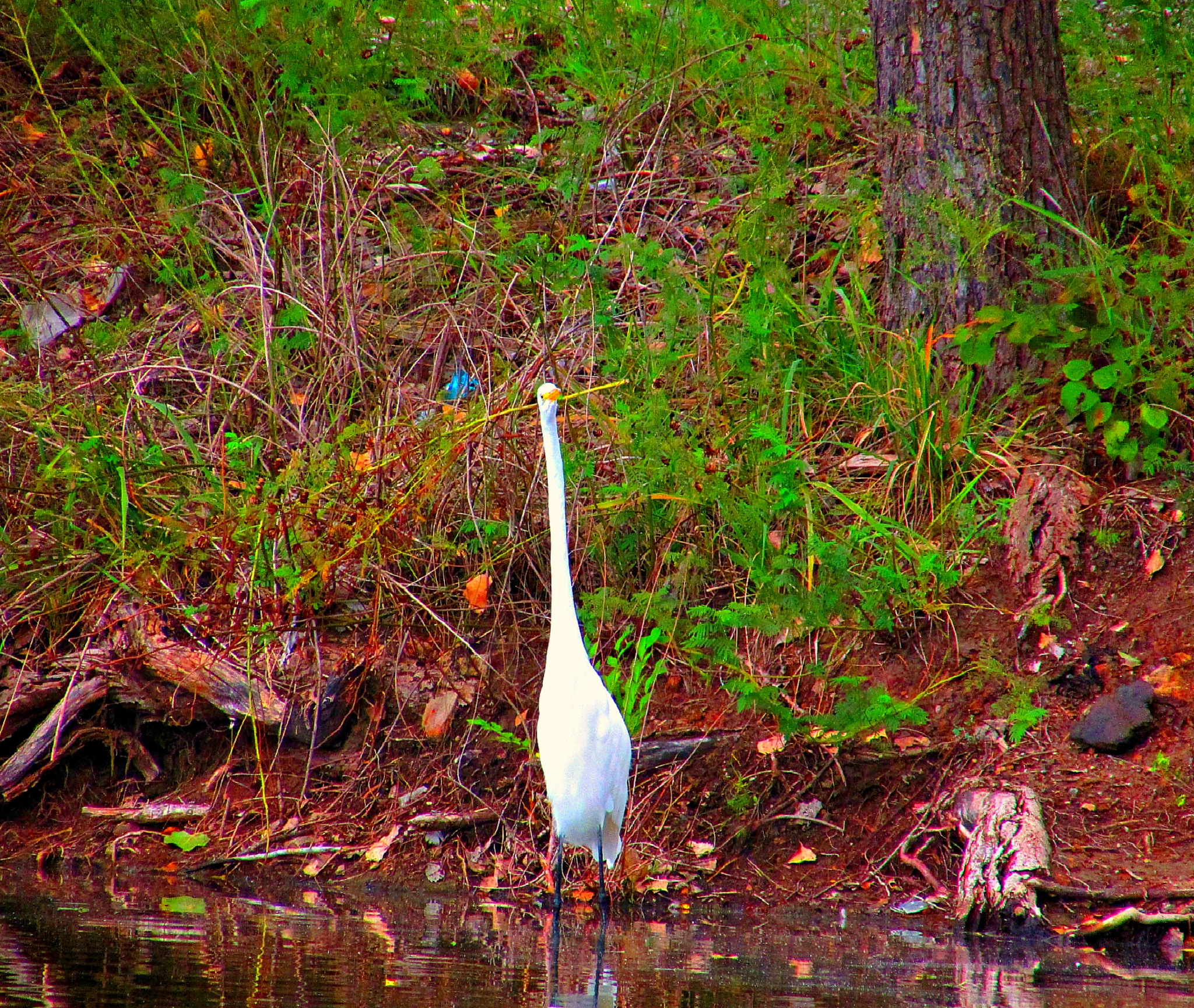 To Regret Or Not To Regret . . . Says The Egret by Lione'sLens