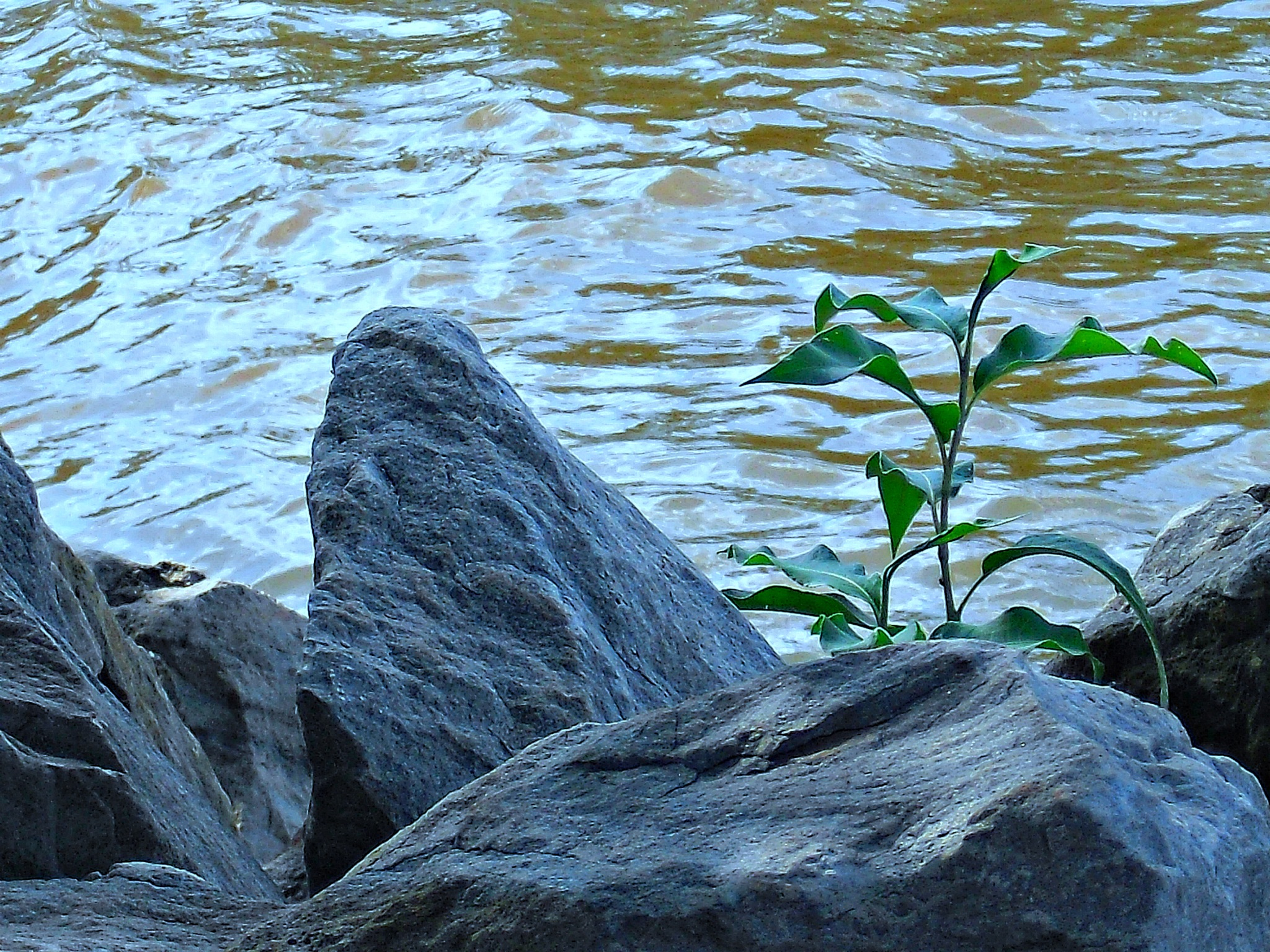 Amongst The Rocks & Water . . . Life Exists by Lione'sLens