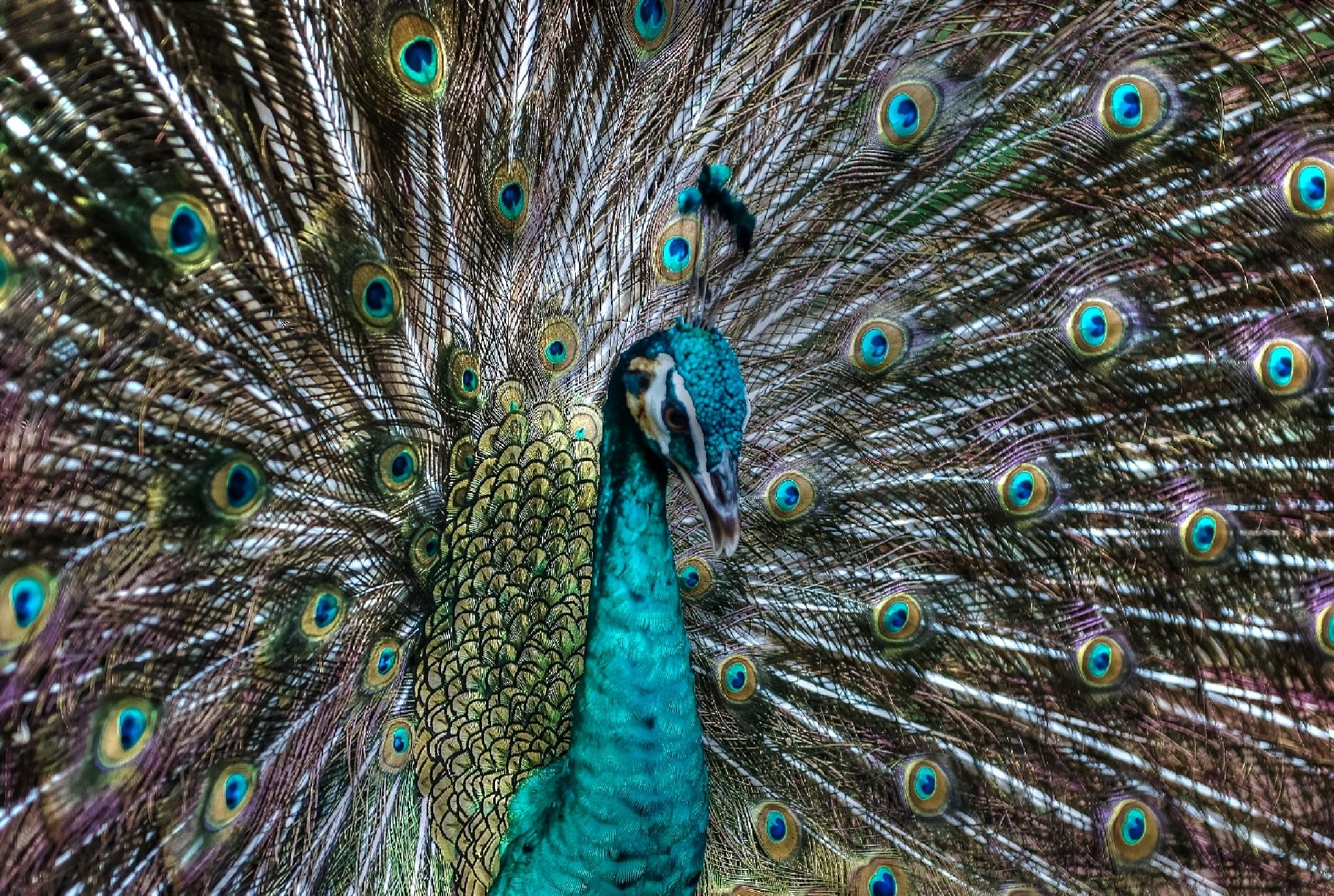 Don't Hate Me Because I'm Beautiful! by Connie M Van Cleve