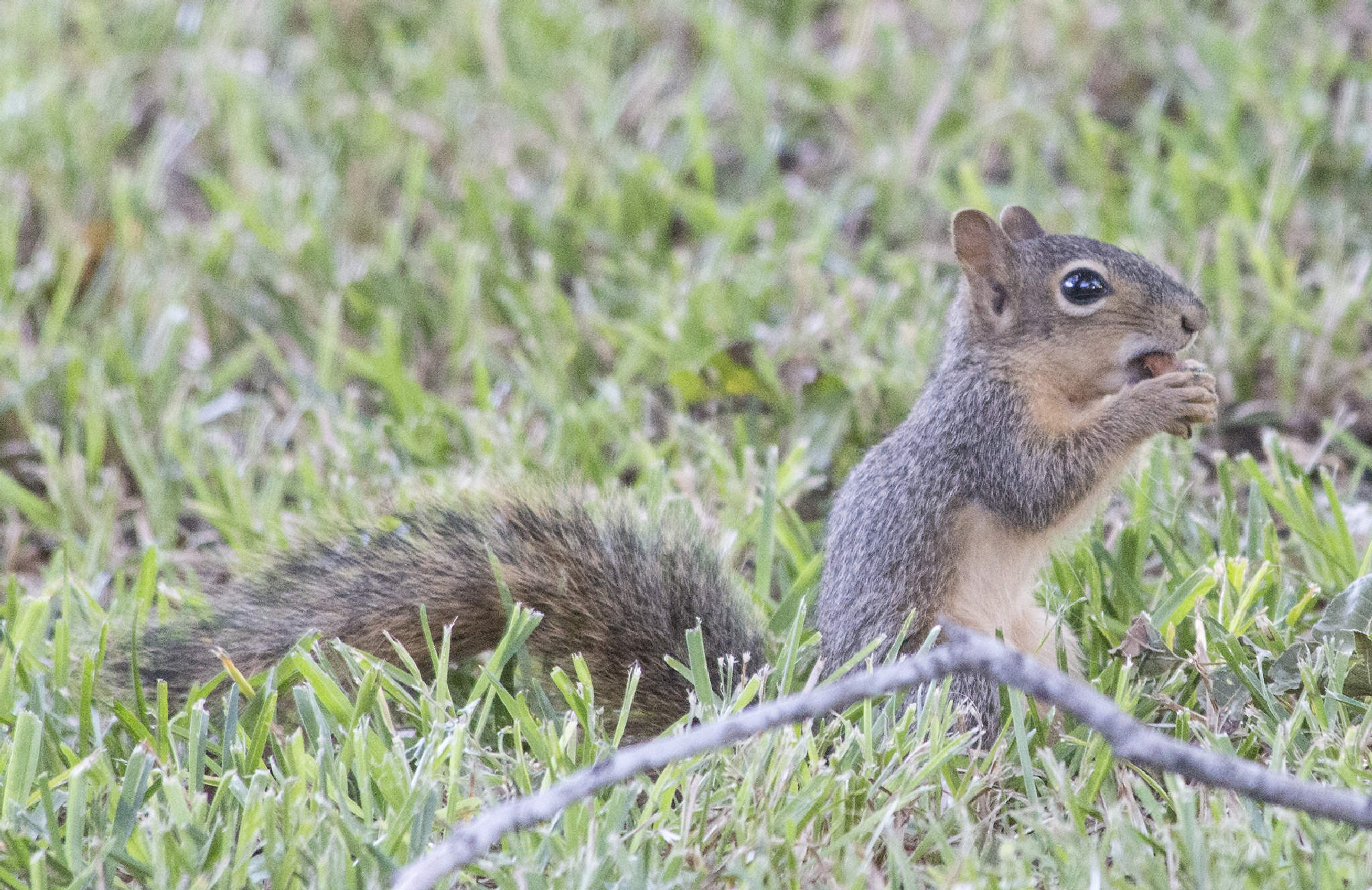 Squirrle 5 by Wade Pitcher