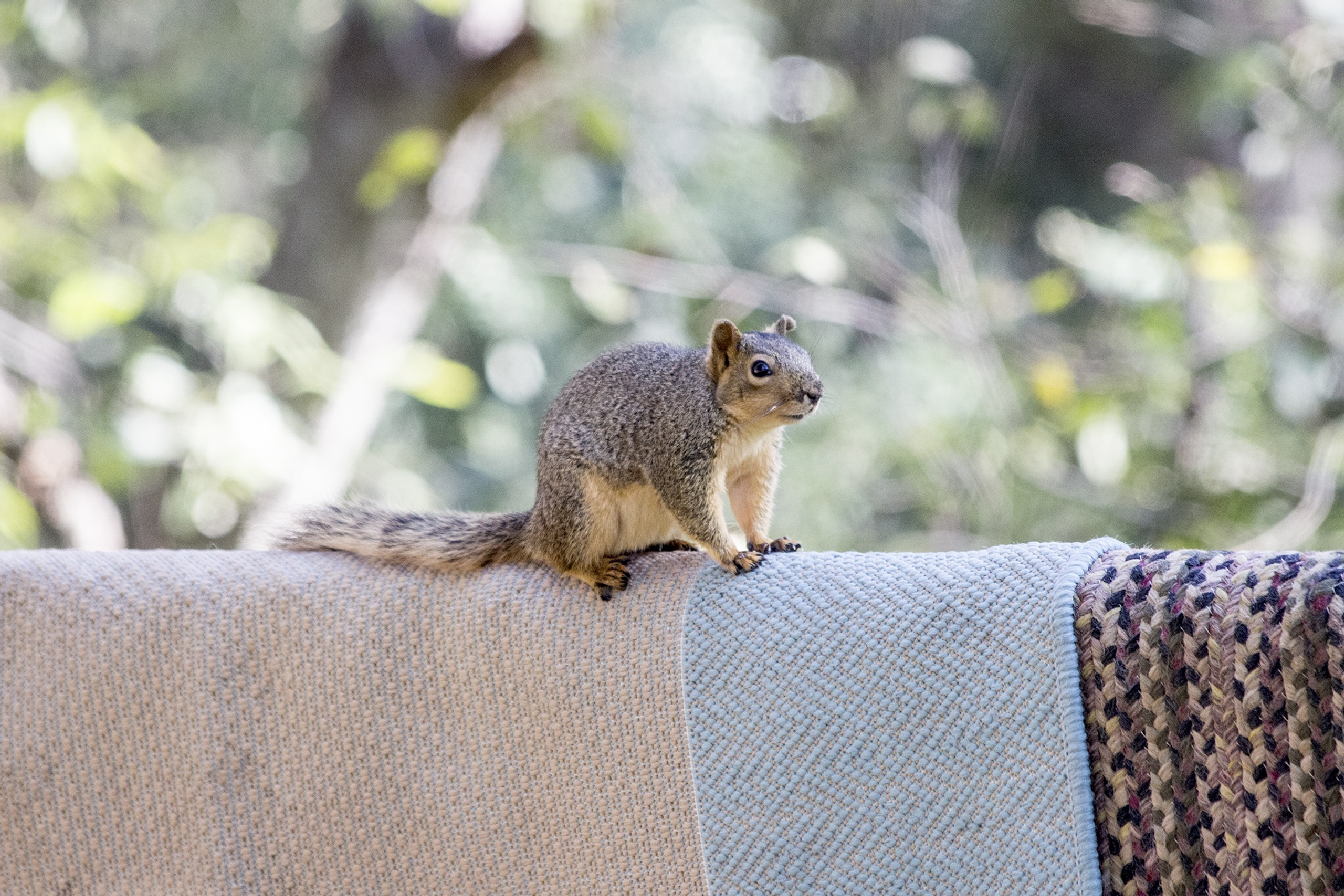 Squirle on fence by Wade Pitcher