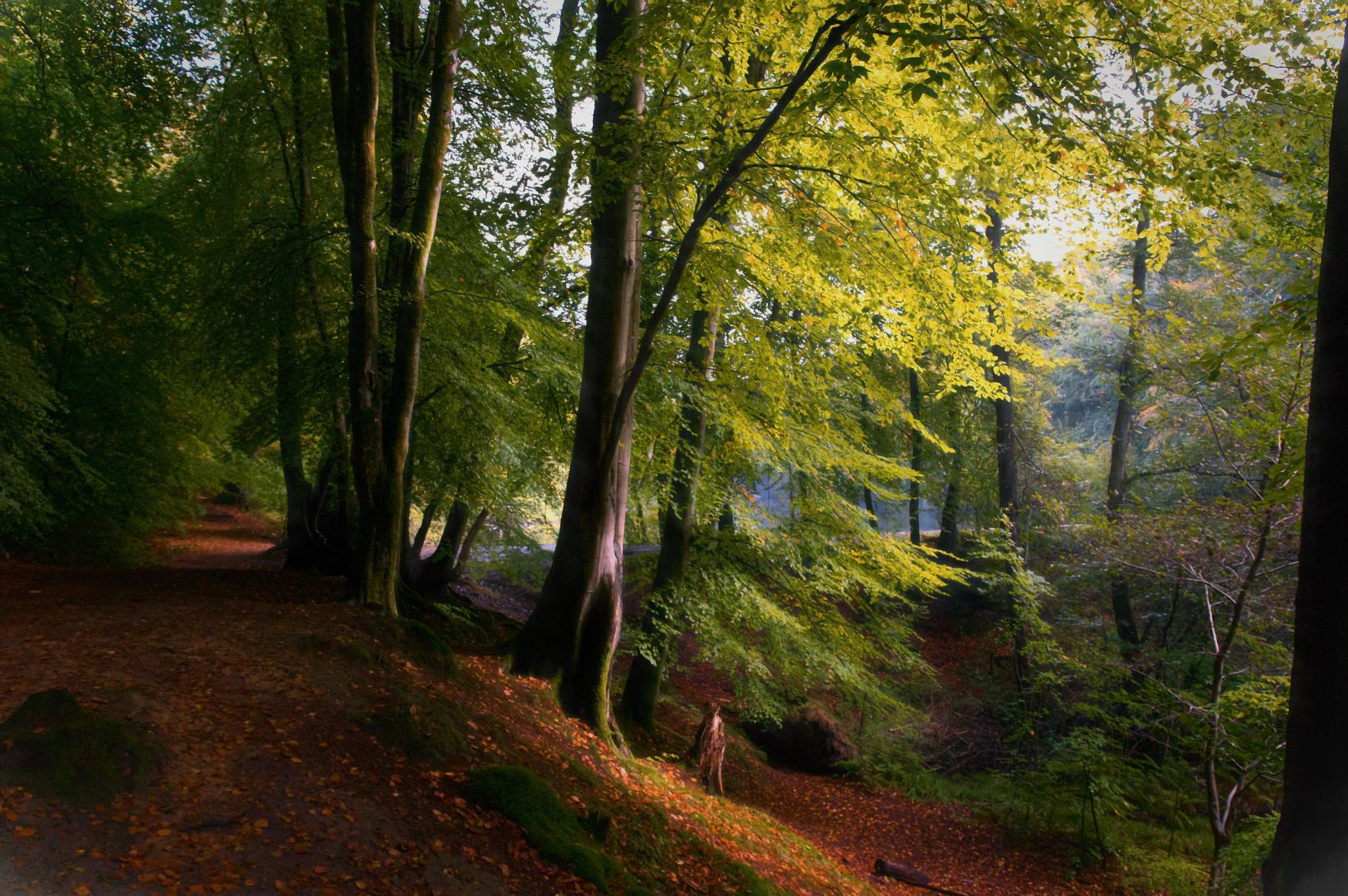 Autumn Morning by Paul Clarke