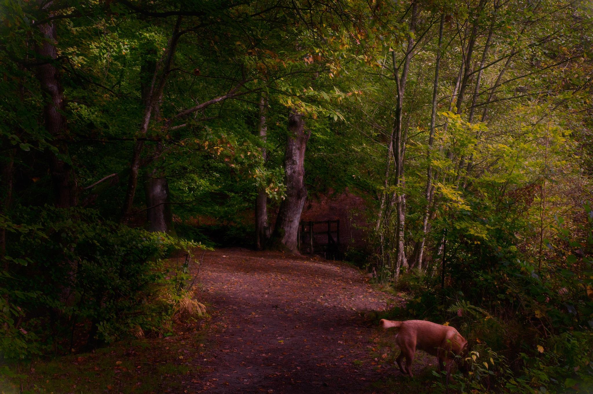 Little Wooden Bridge by Paul Clarke