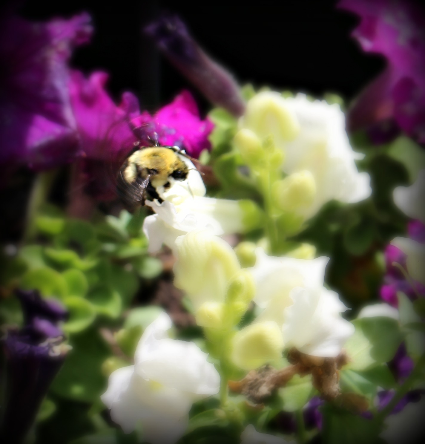 Busy Bee by RichandCheryl