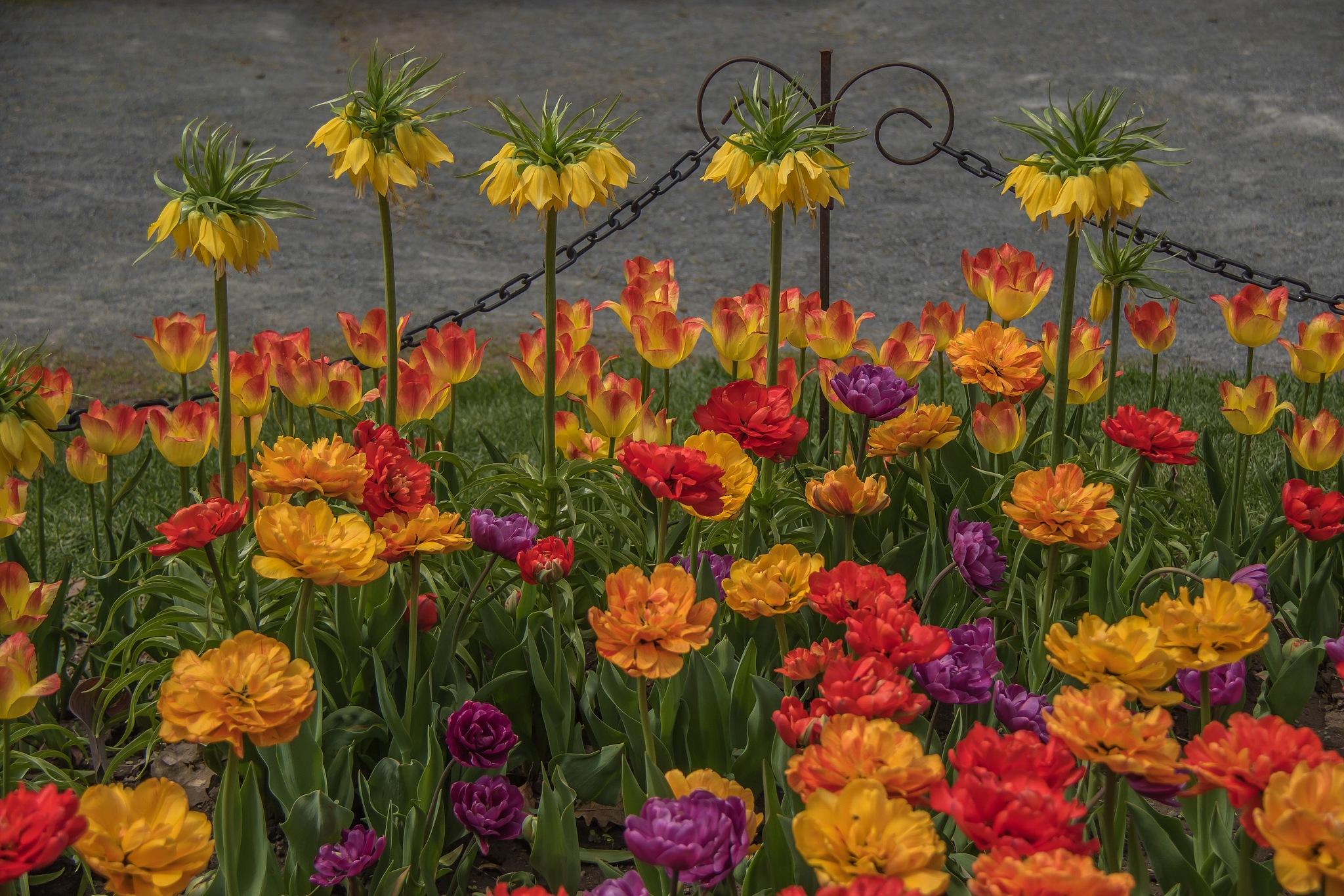 Vibrant Spring Garden by Ruth Sano