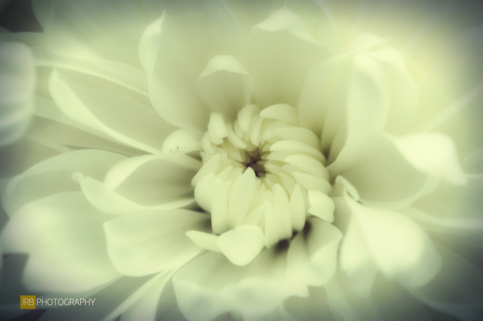 White Flower by jboxall