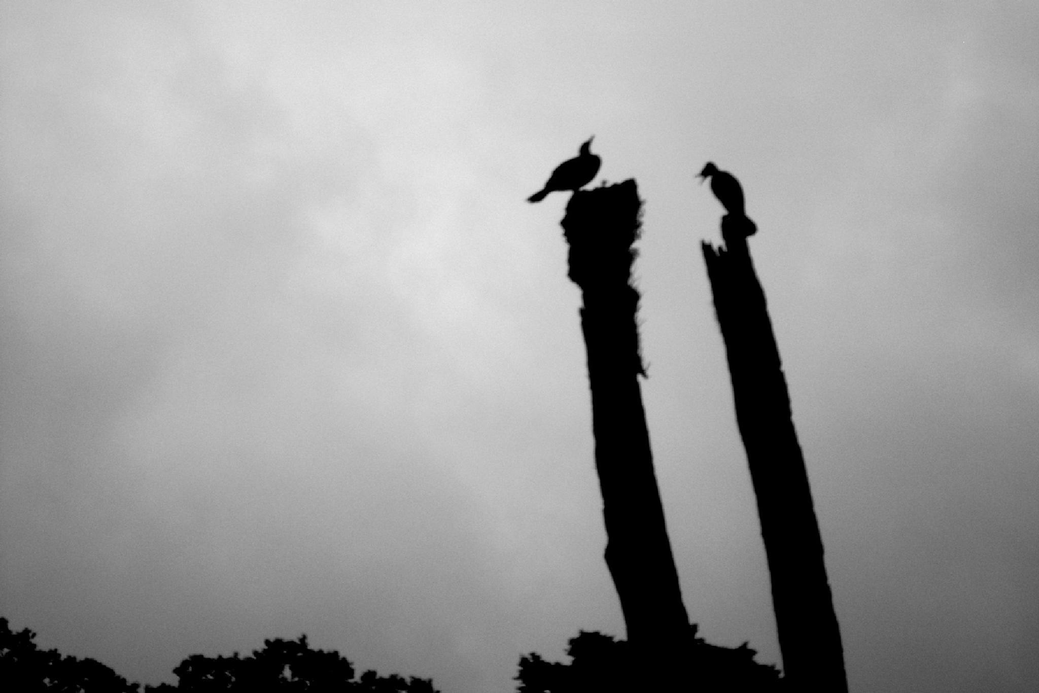 Untitled by Dr. Ghanshyam Patel