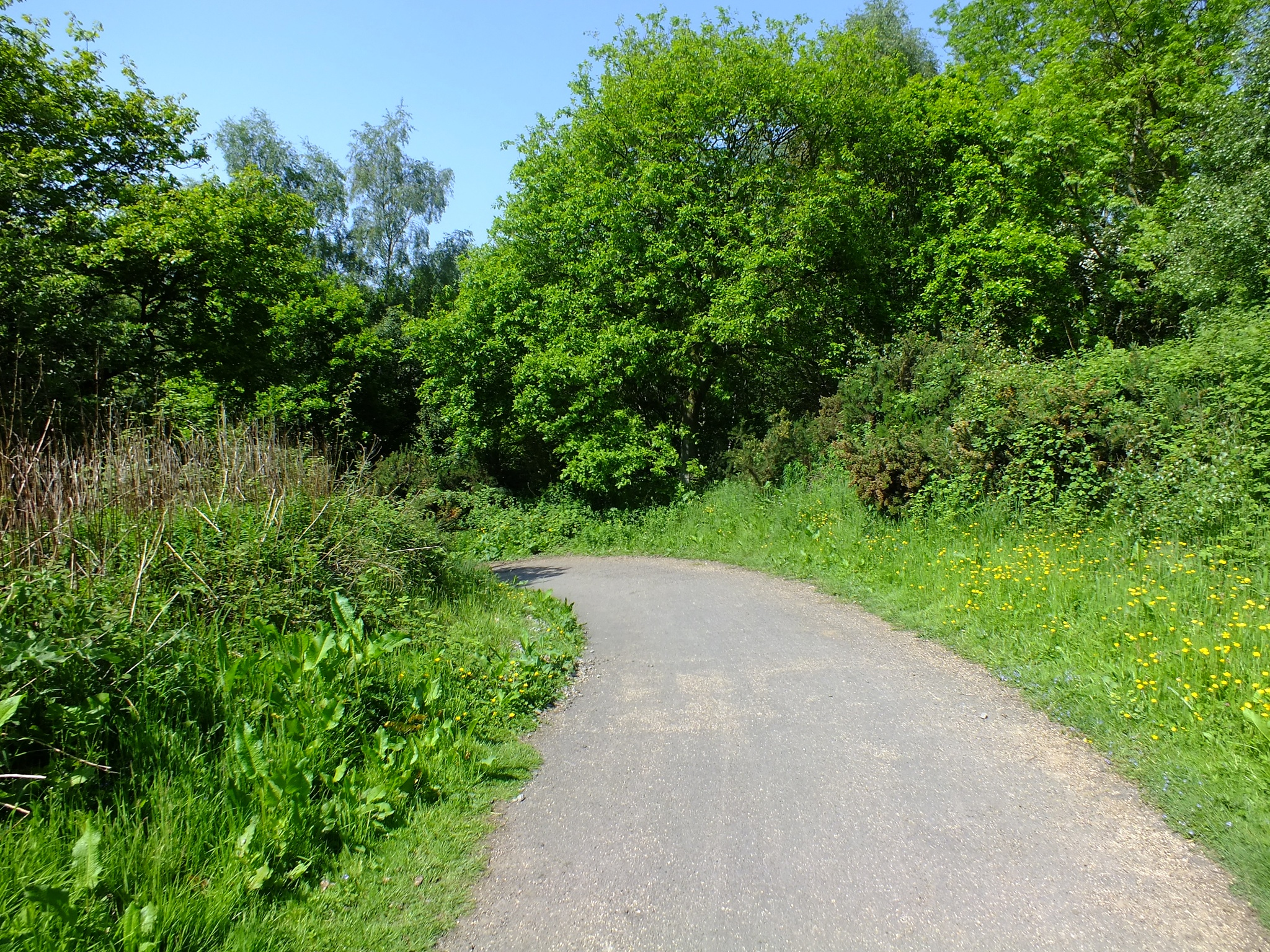 Photo in Nature #park #path #durham #green #trees #plants #nature