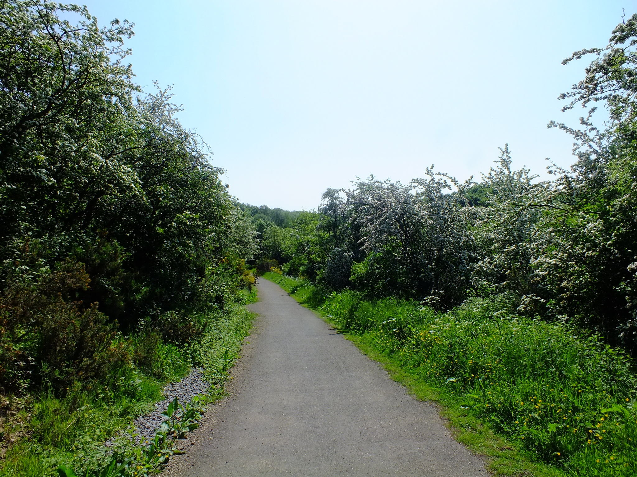 Photo in Nature #park #path #nature #walk #durham #green #trees #plants