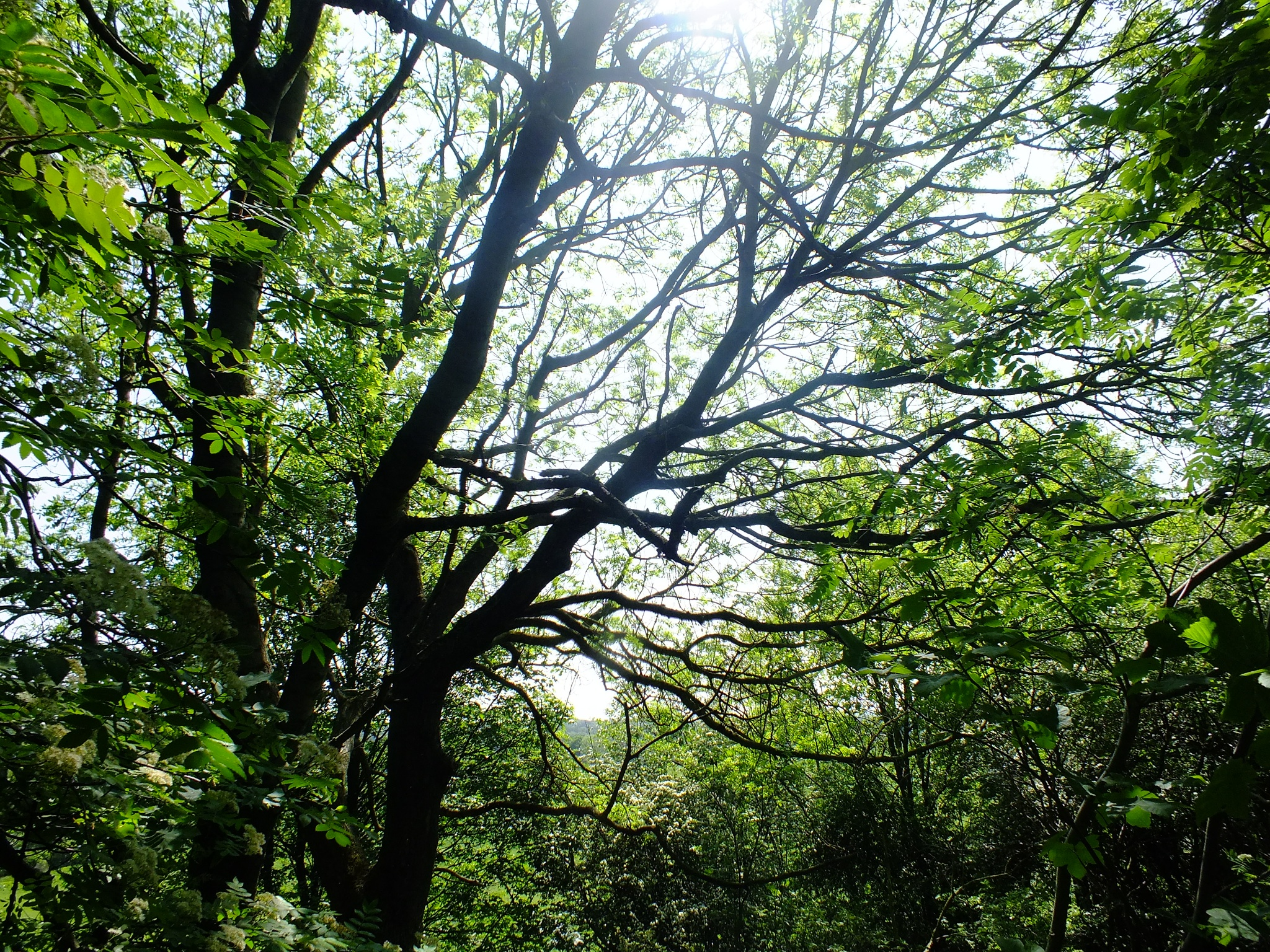 Photo in Nature #park #trees #plant #nature #green #branches #roots #sunny #sun