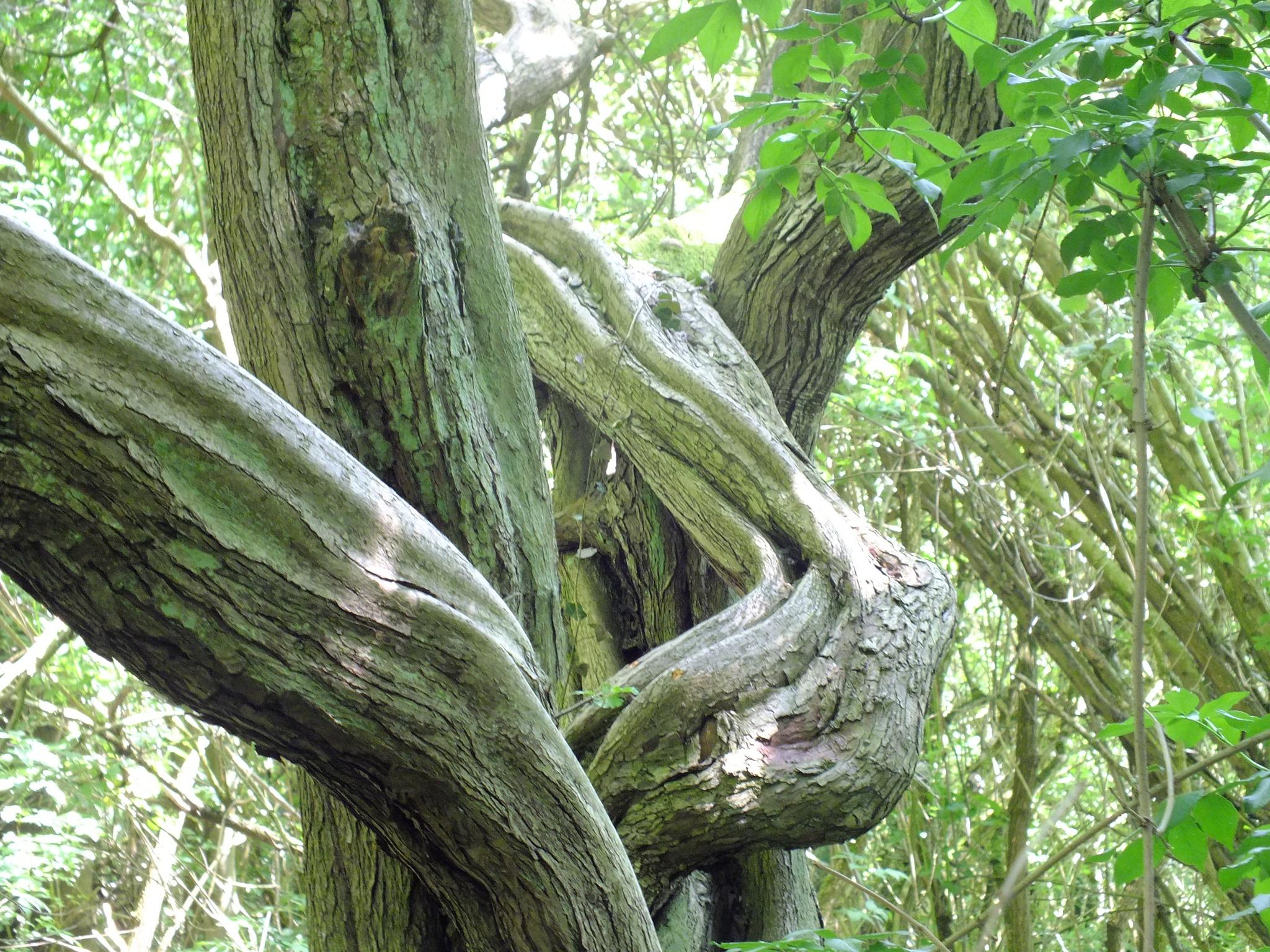 Photo in Nature #twist #tree #plant #nature #park #woods #bark #sun