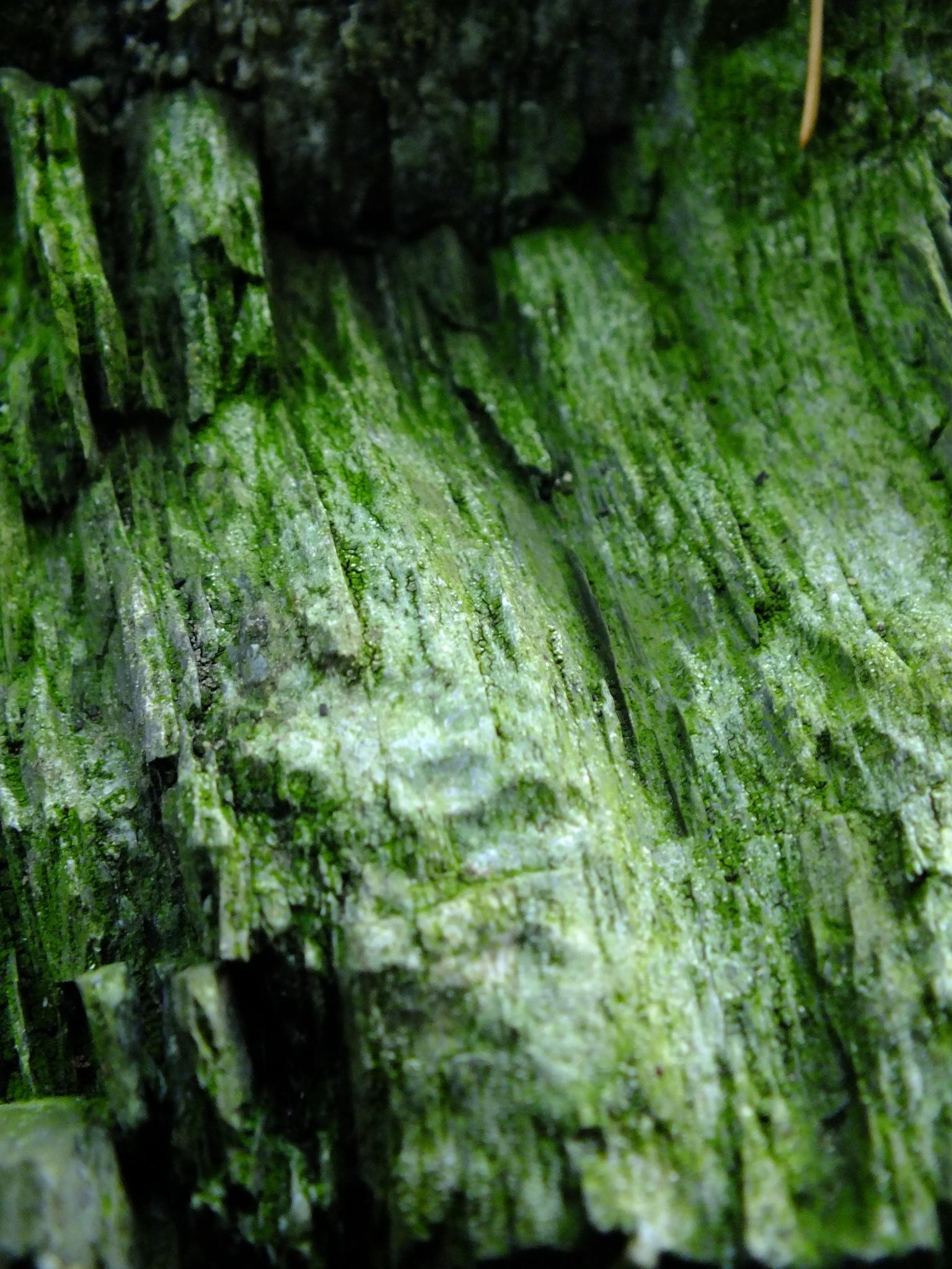 Mangreen Stone 03 by afrior