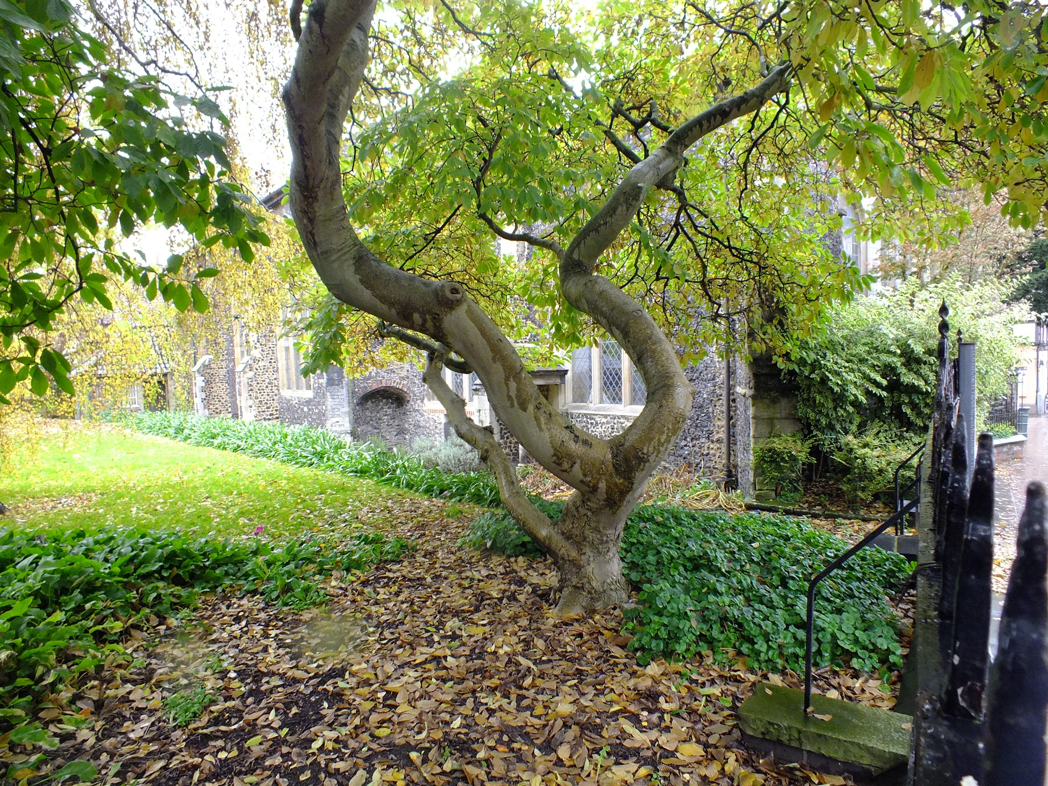 Norwich Trees 01 by afrior