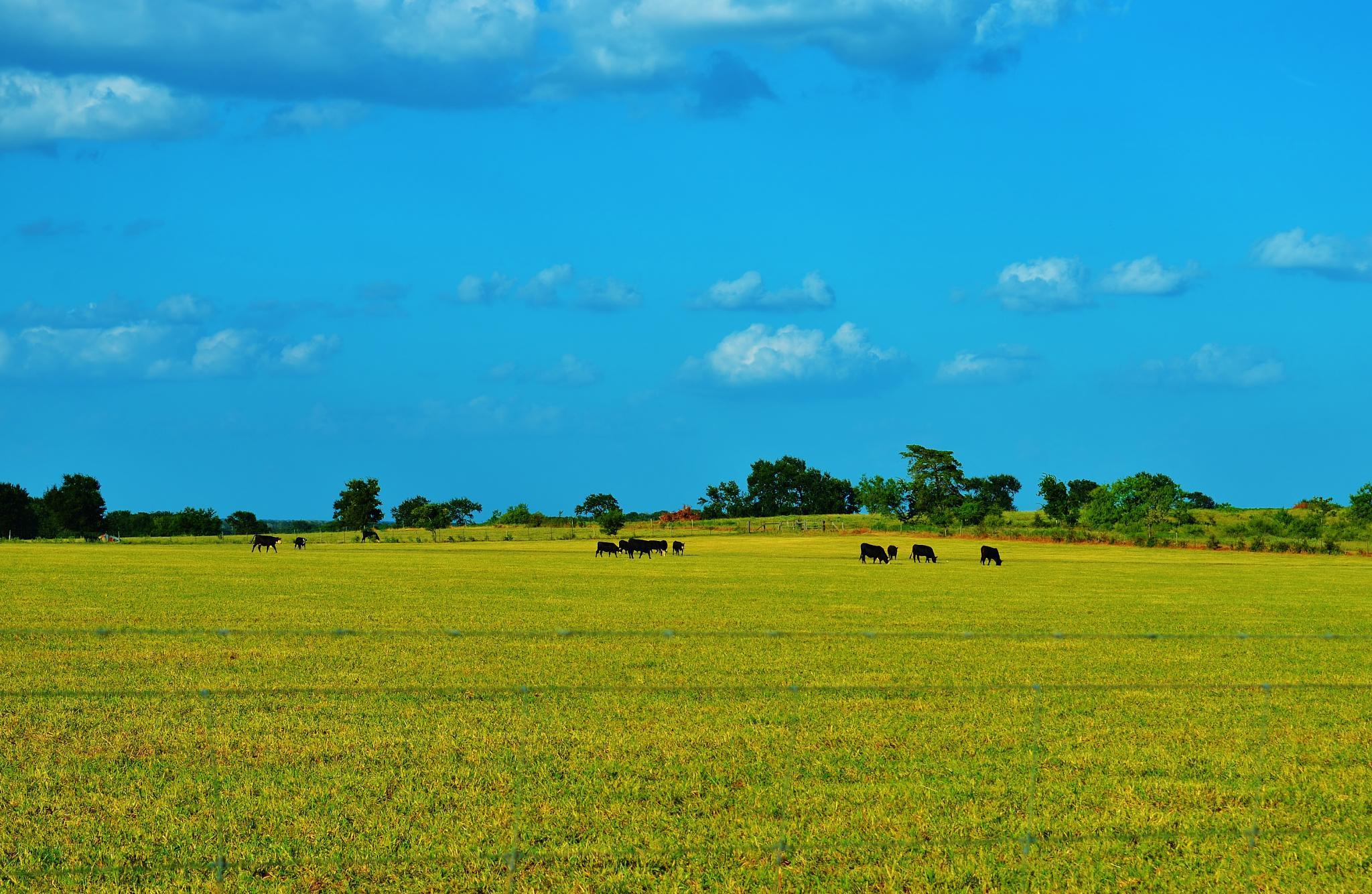 Grazing Herd  2320 by Jim Suter