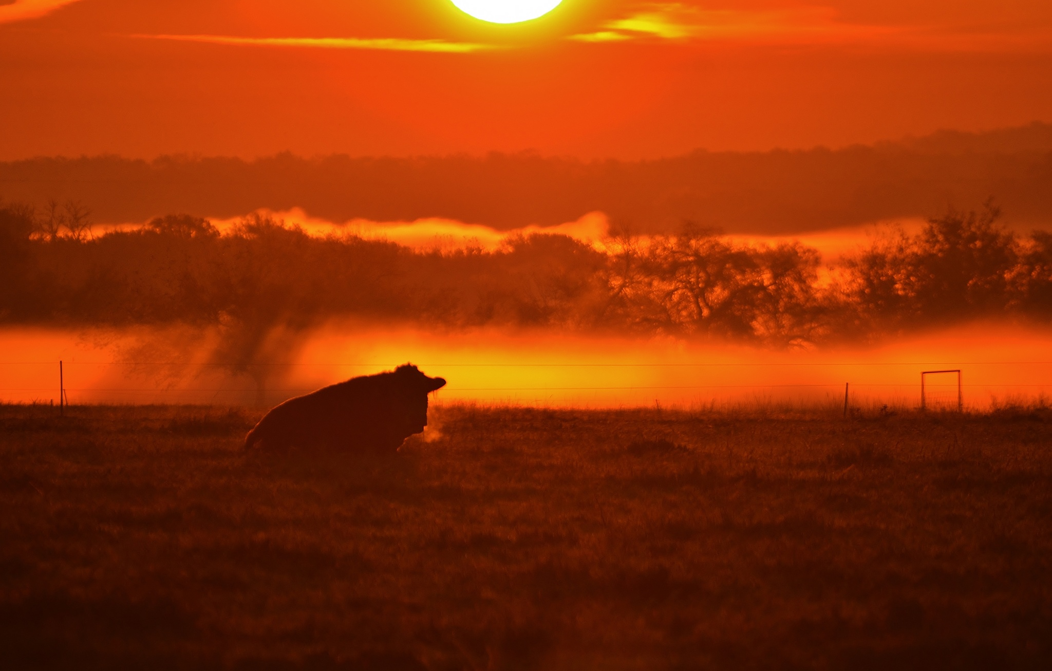 Bull In Frosty Pasture  6312 by Jim Suter