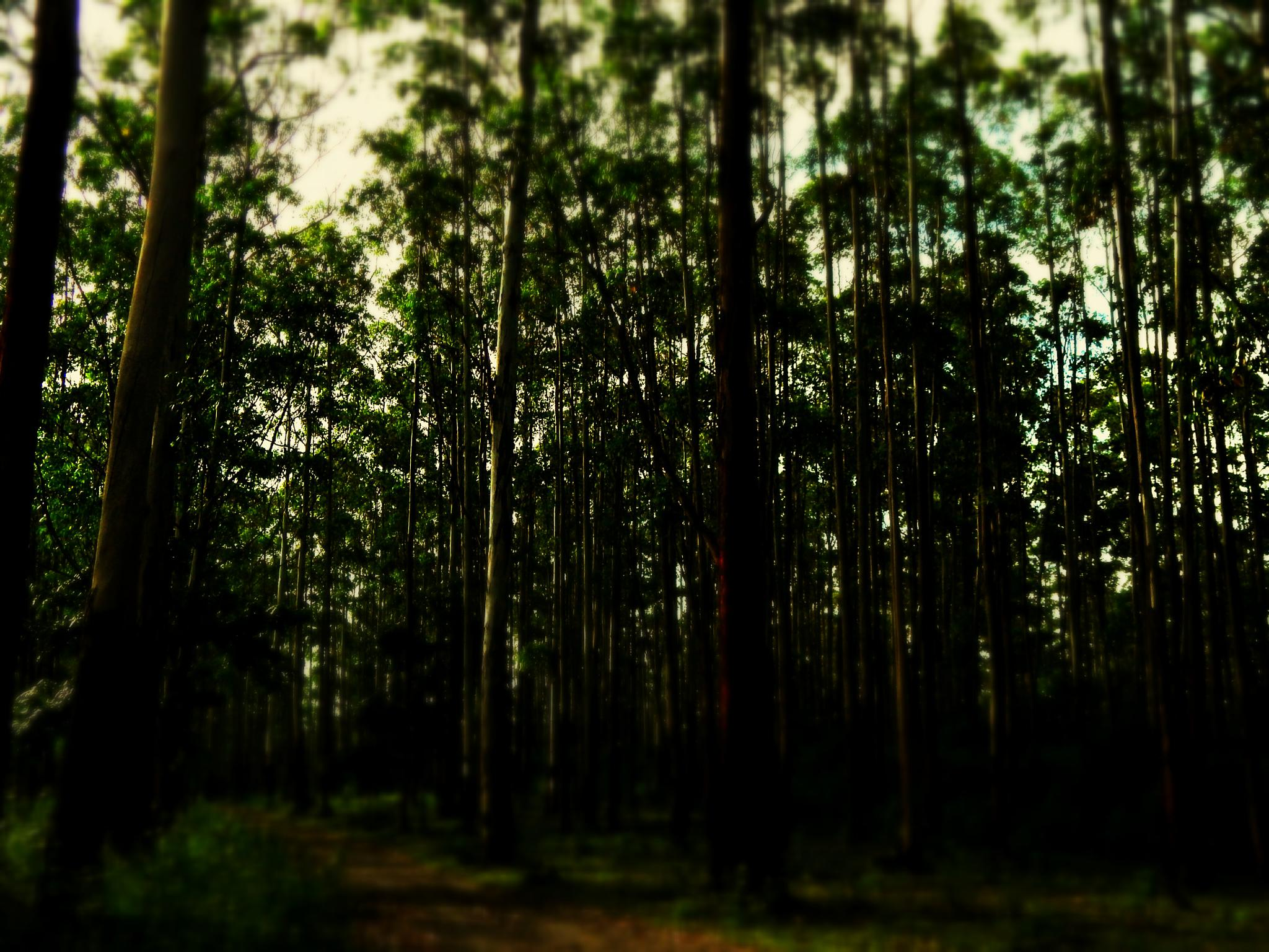 forest by Aritra ghosh