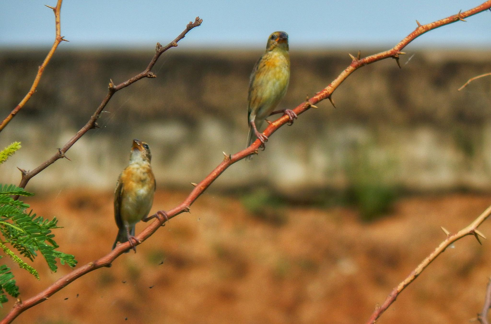 two birds by Aritra ghosh