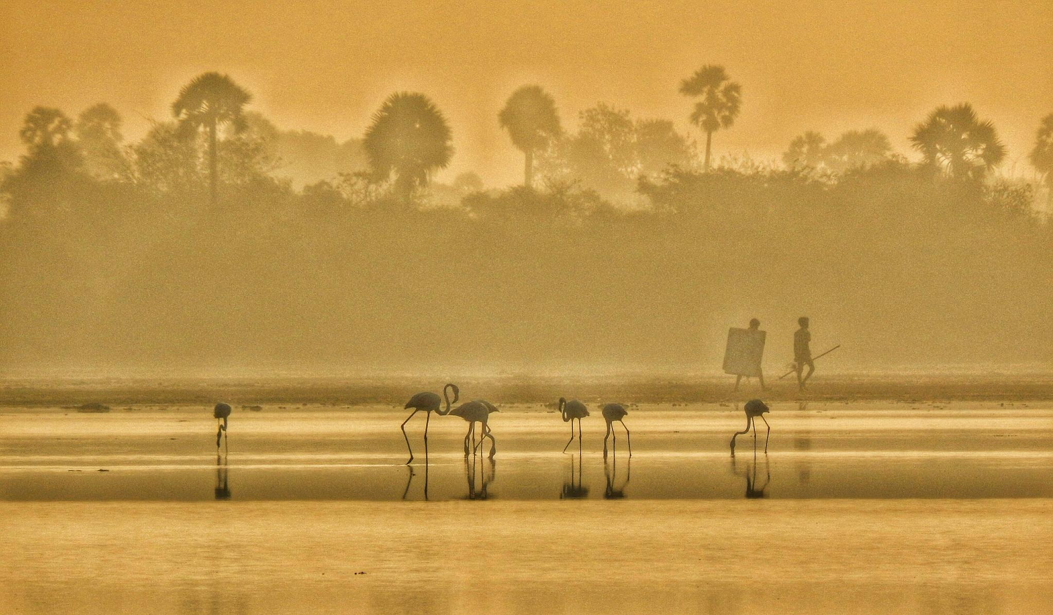 the hunters and the birds by Aritra ghosh