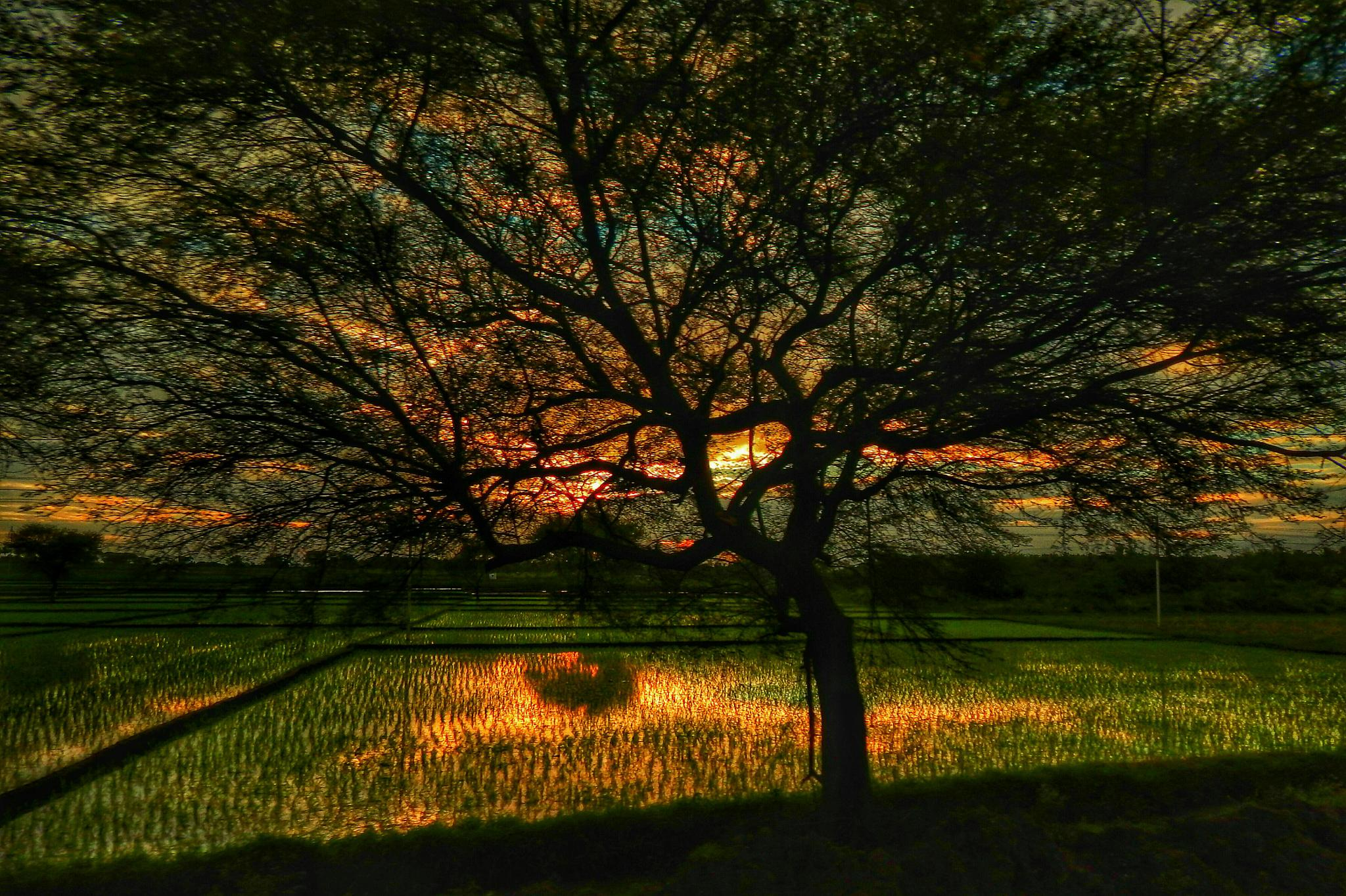 the sky and the tree at sunset by Aritra ghosh