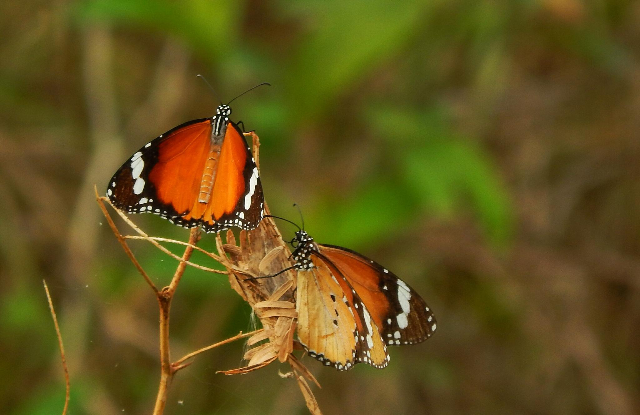 two little beauties by Aritra ghosh
