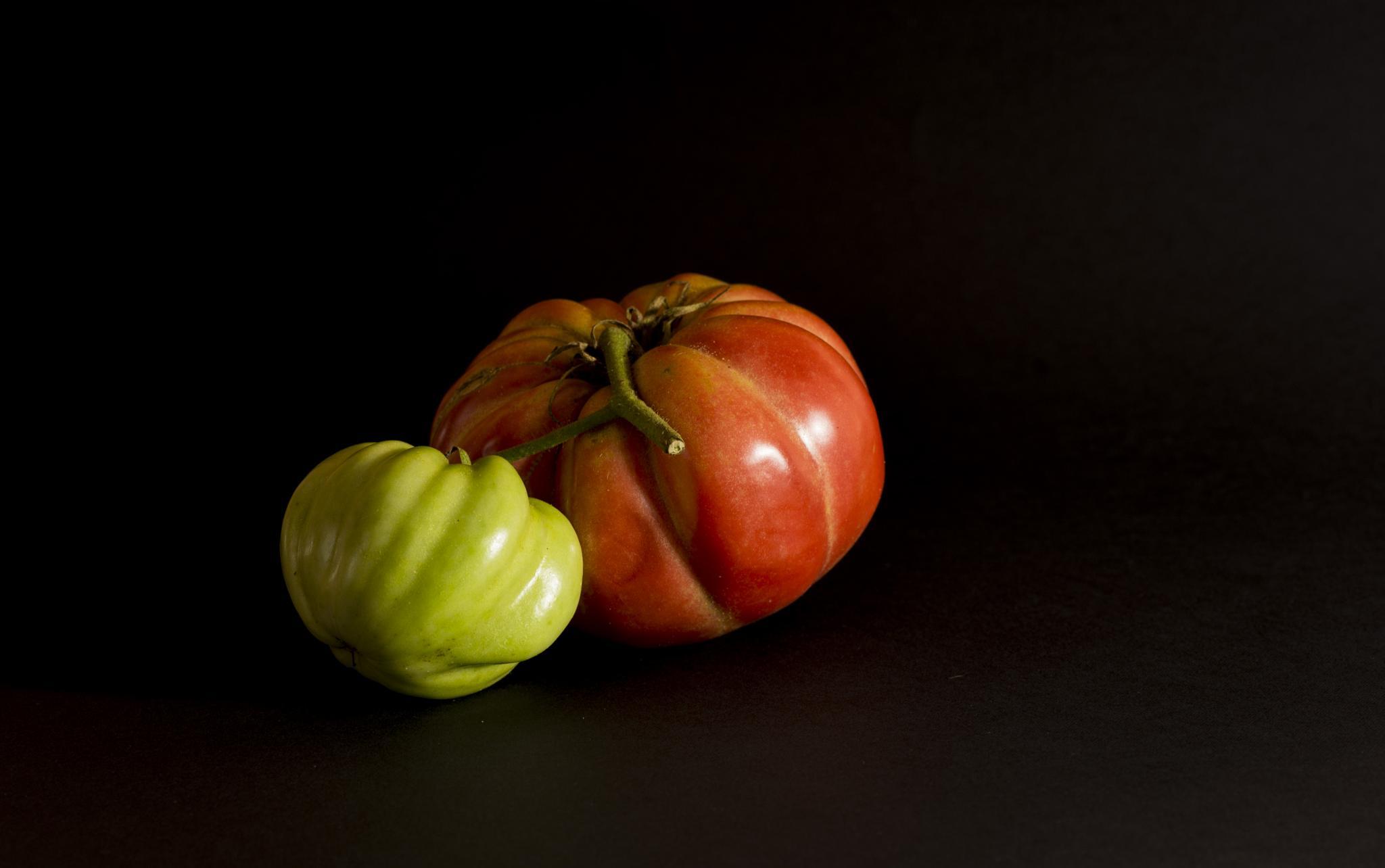 Tomatoes by NicoSebaste