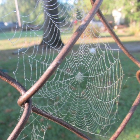 morning spider web by Elora Young Longstreth