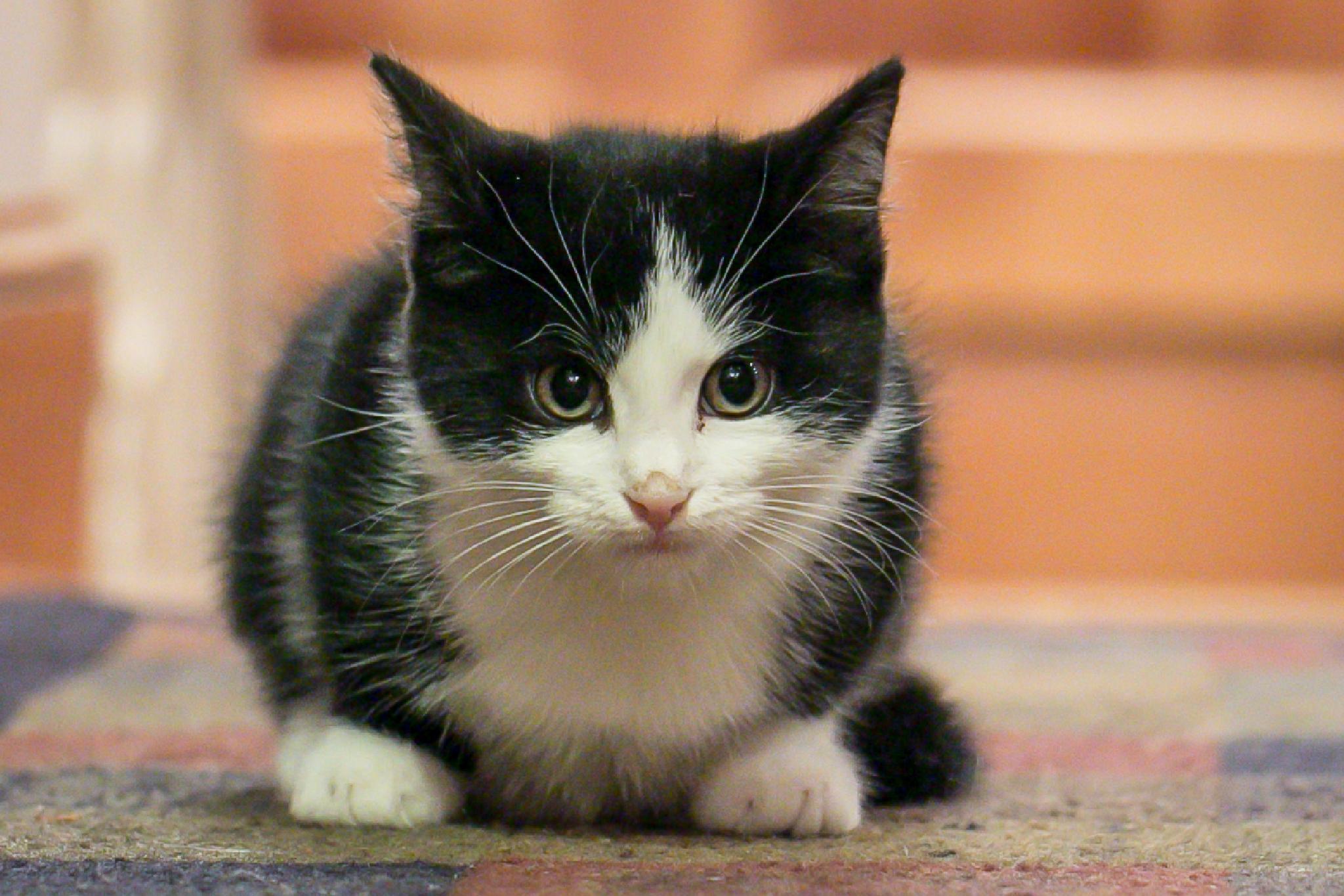 Kitty by Cary Chu