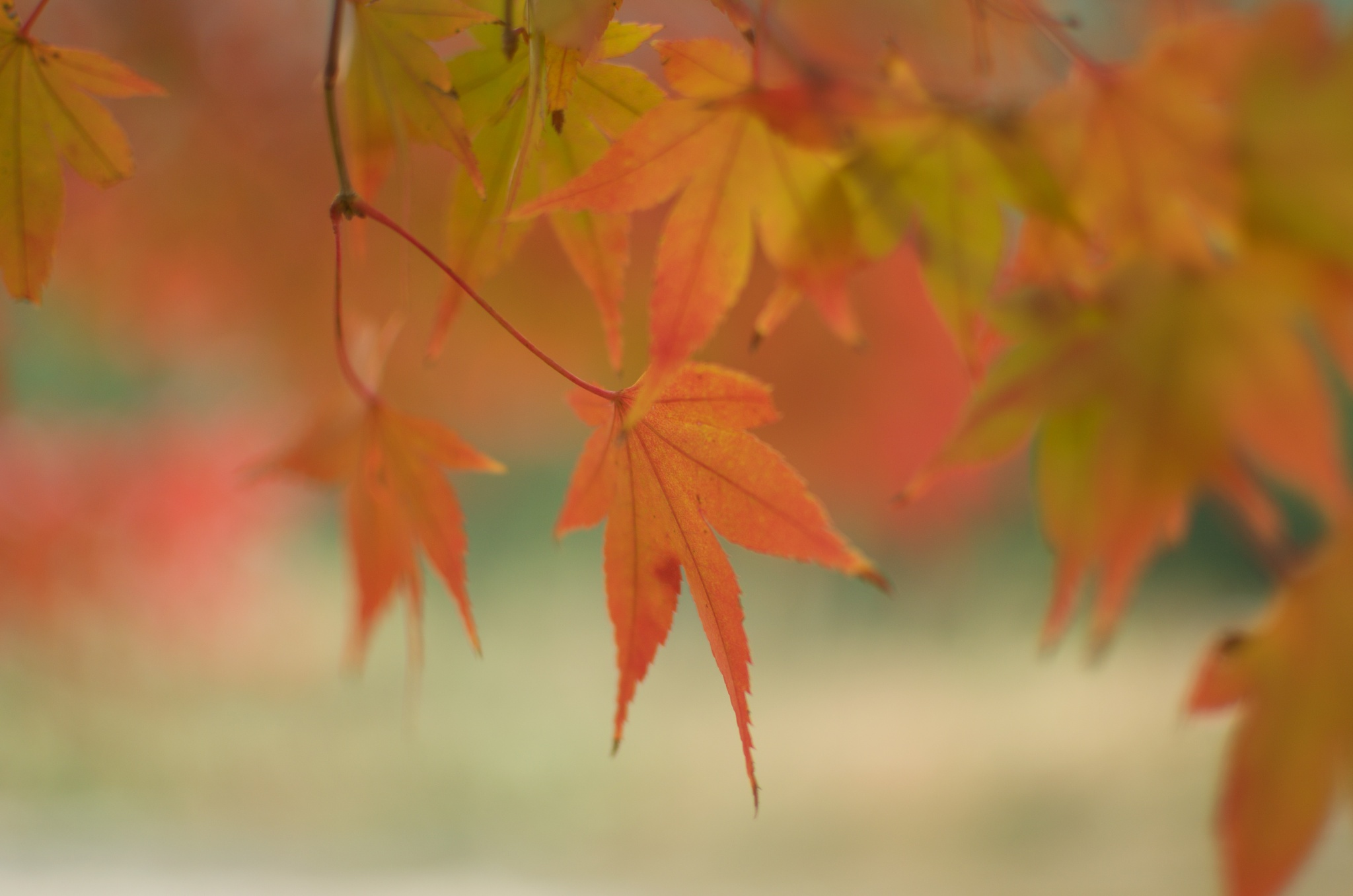 The Rest of the Autumn #2 by AYA World Photography