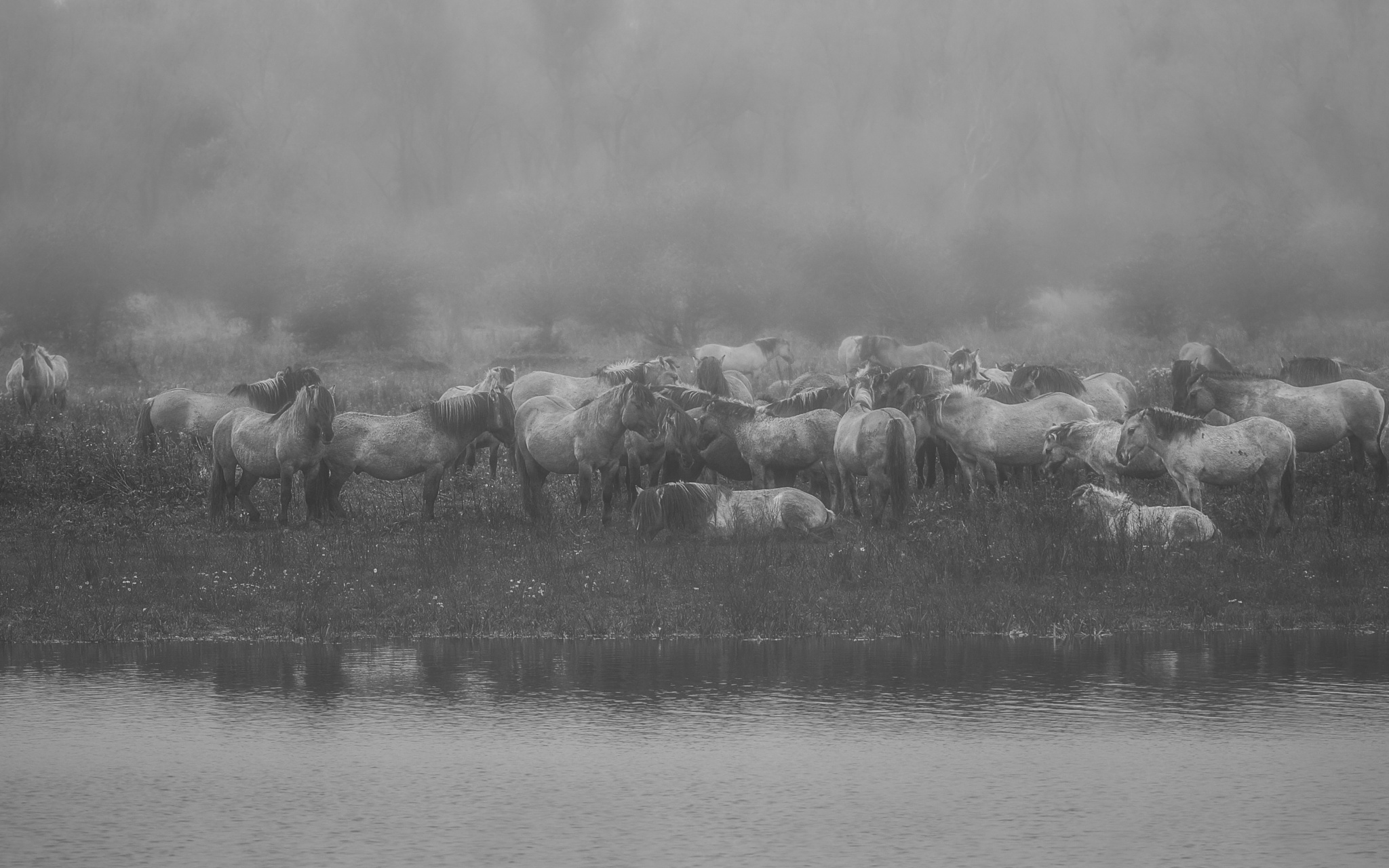Wild horses in the fog by Sarah Di Tucci