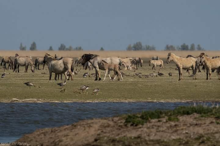 Wild horses by Sarah Di Tucci