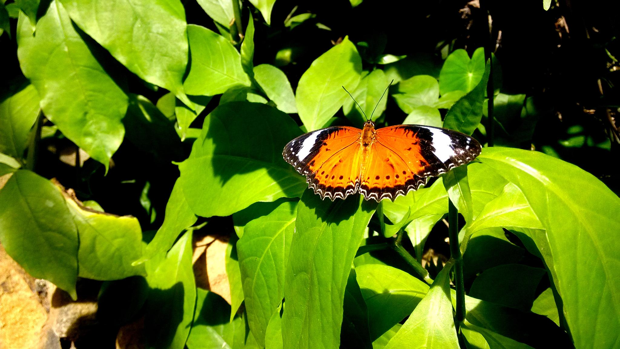 BUTTERFLYYYY by michelle_liang