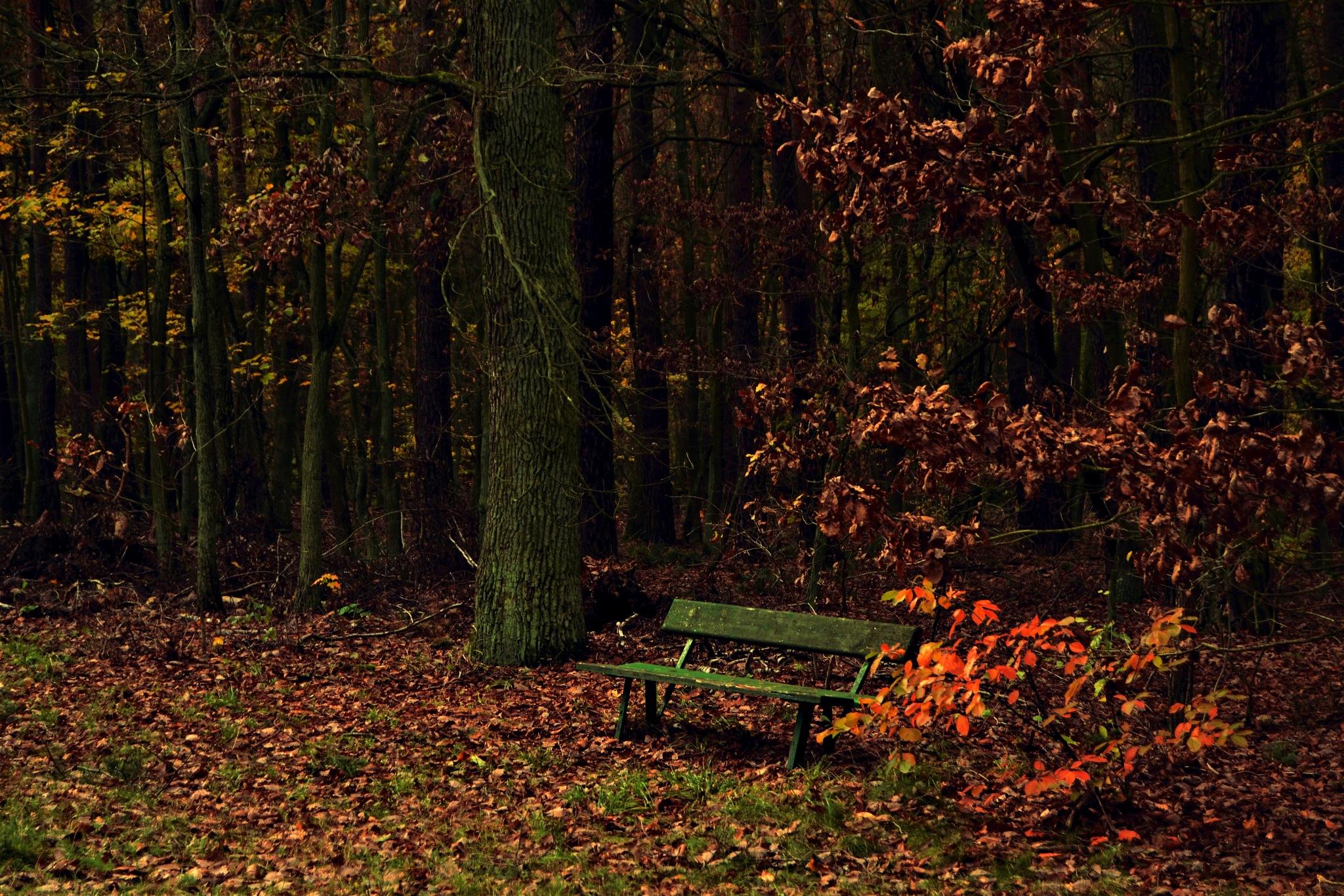Im Wald by Laura Lehmann