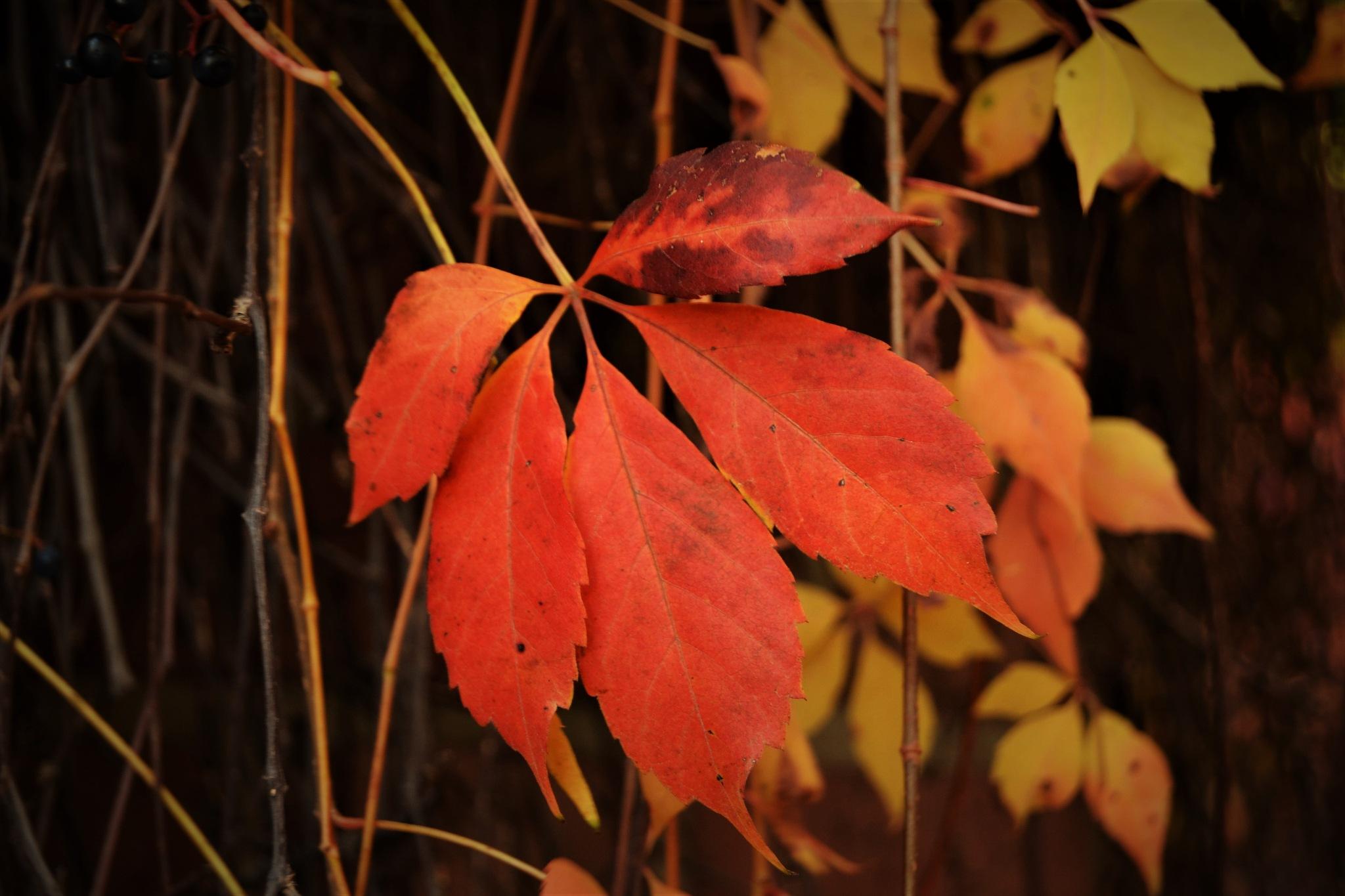 Autumn by Laura Lehmann