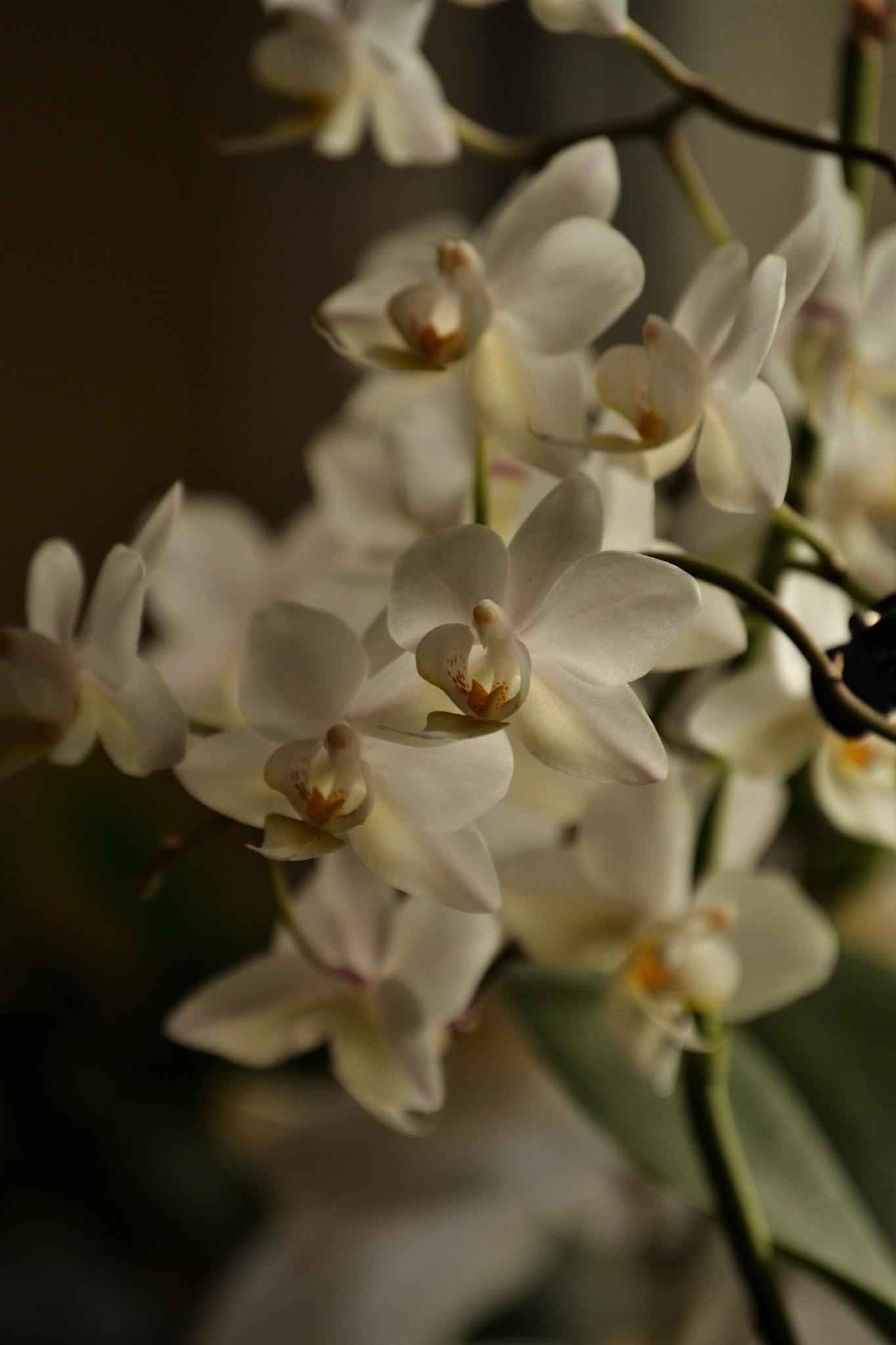 Orchideen by Laura Lehmann