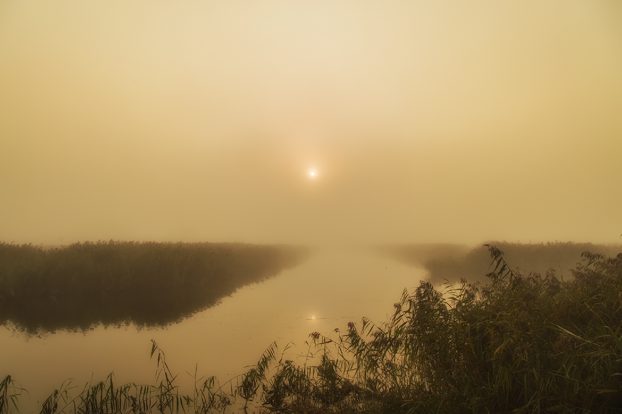 Mists Of Avalon by metallipaul