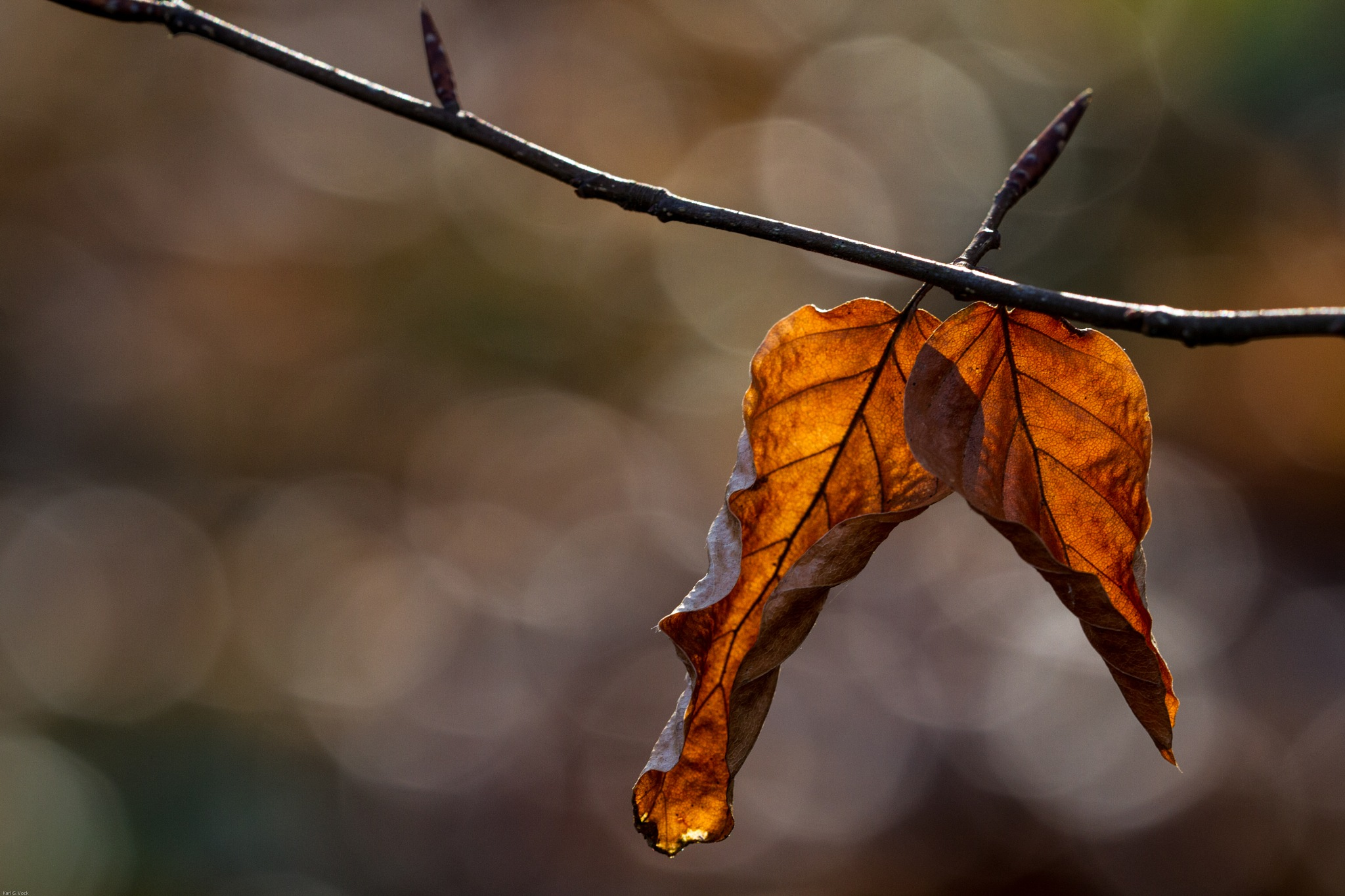 Last leaves by karlvock