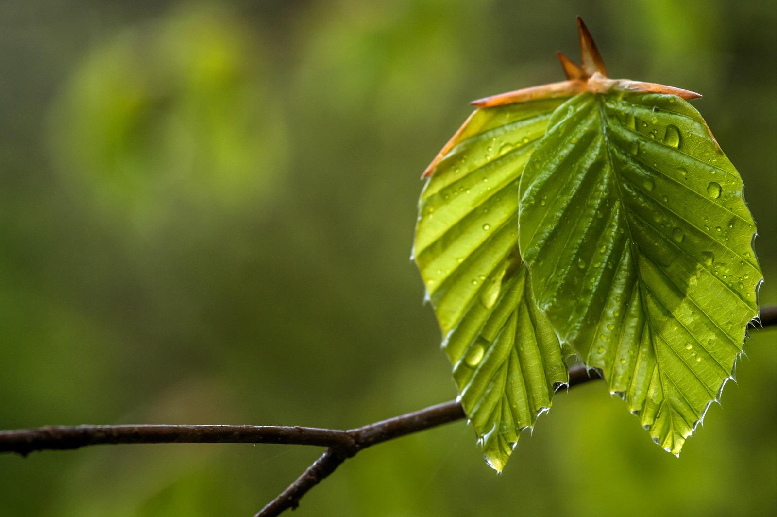Rainy by karlvock