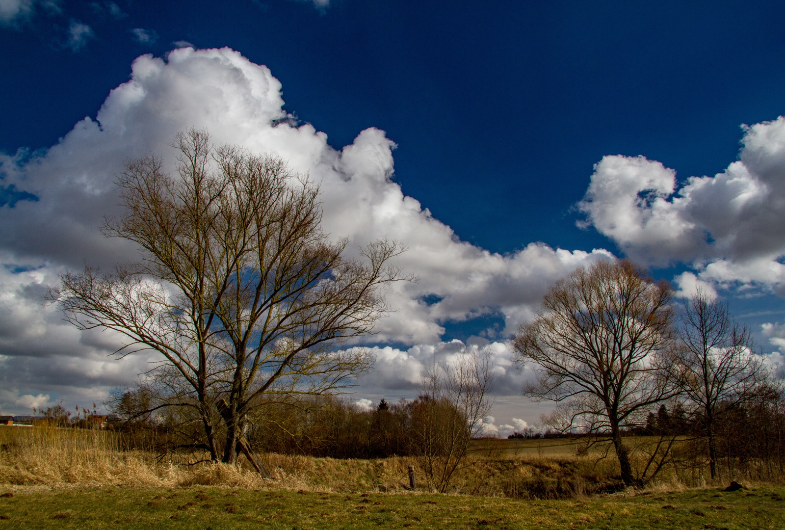 Sunny  by karlvock