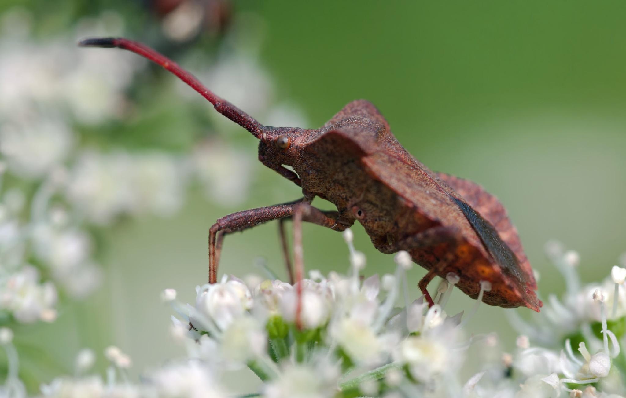 Bug by karlvock