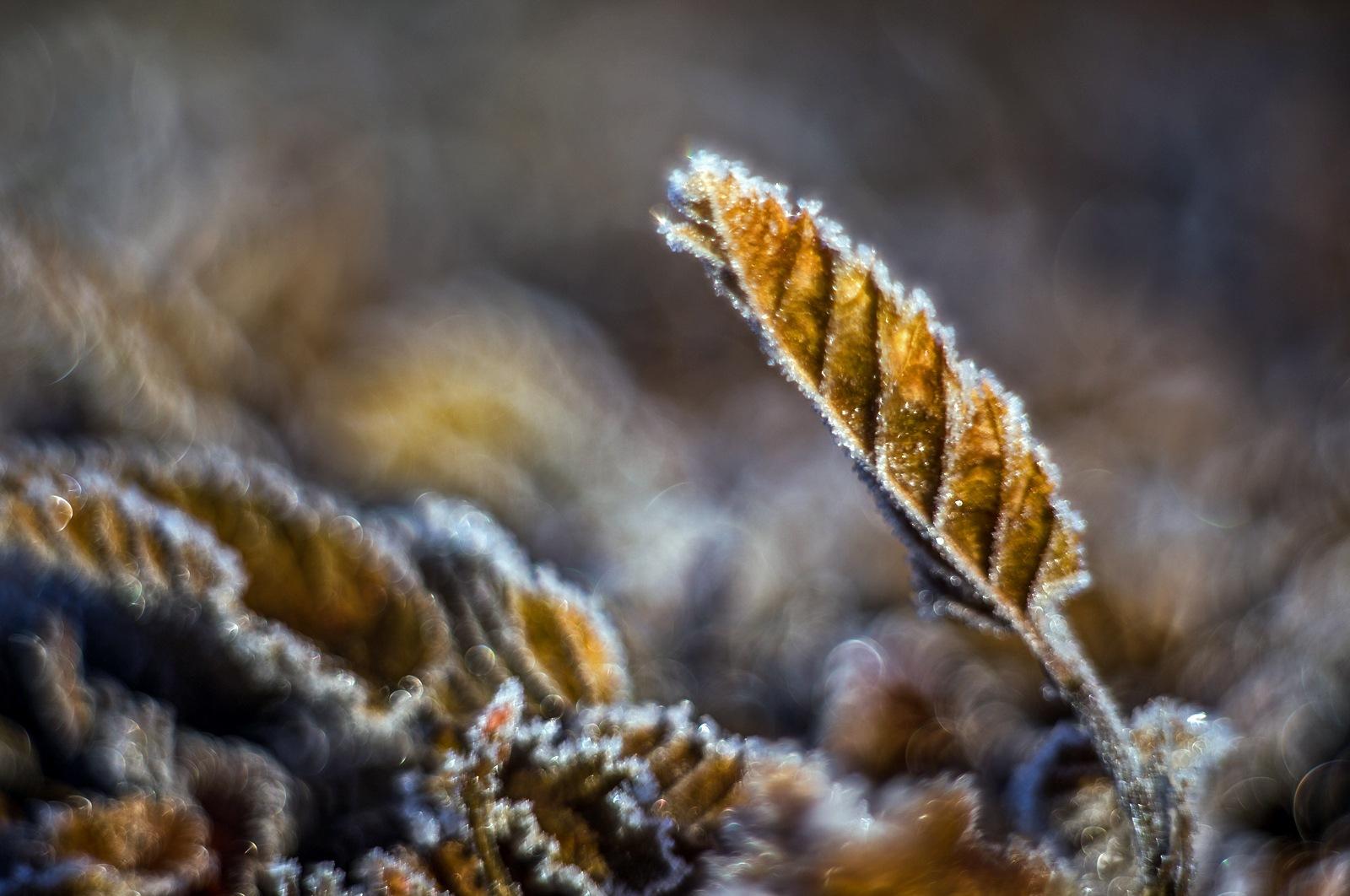 Winterday by karlvock