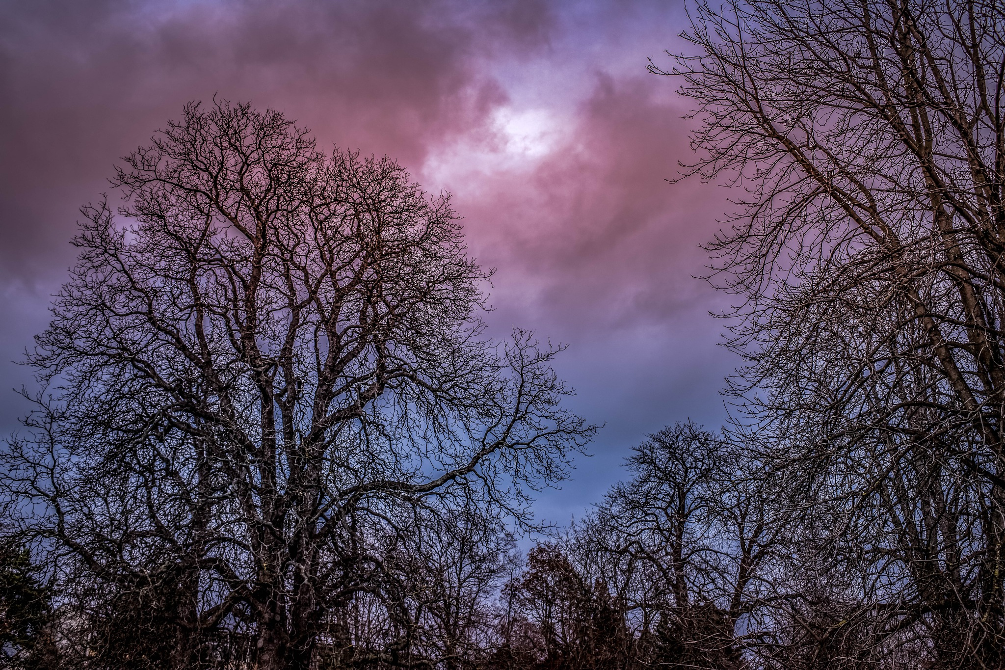 The trees by karlvock