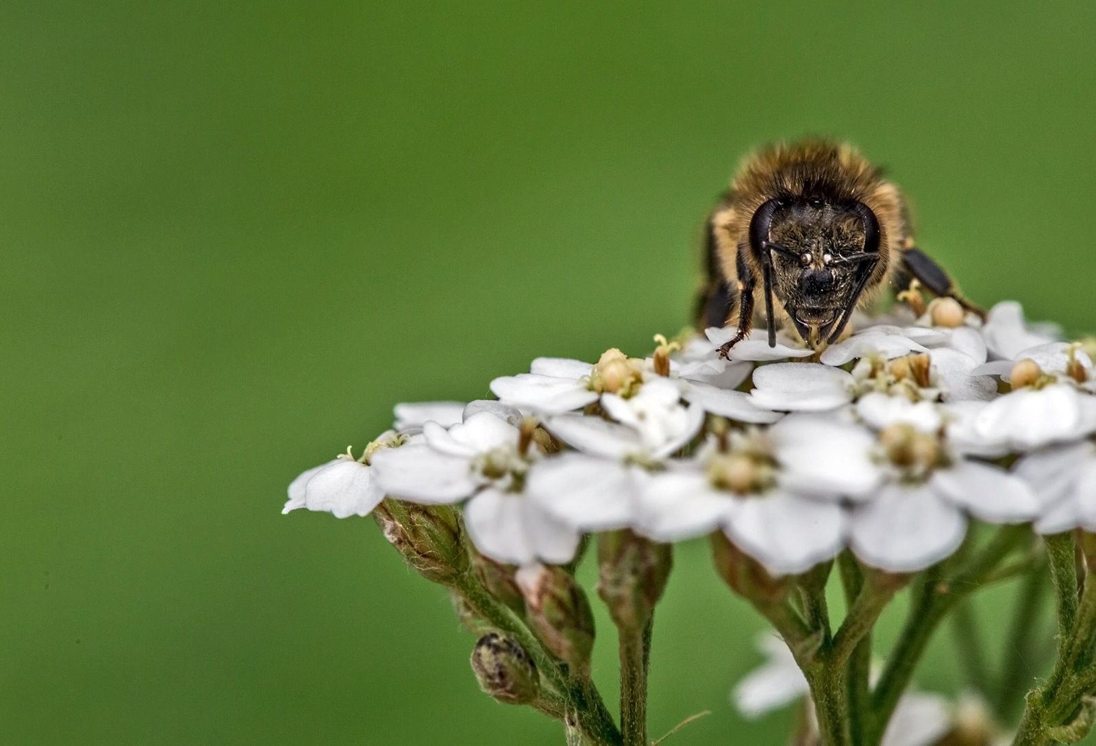 Bee by karlvock