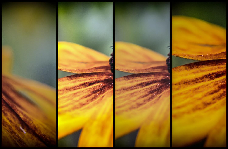 Blossom by karlvock