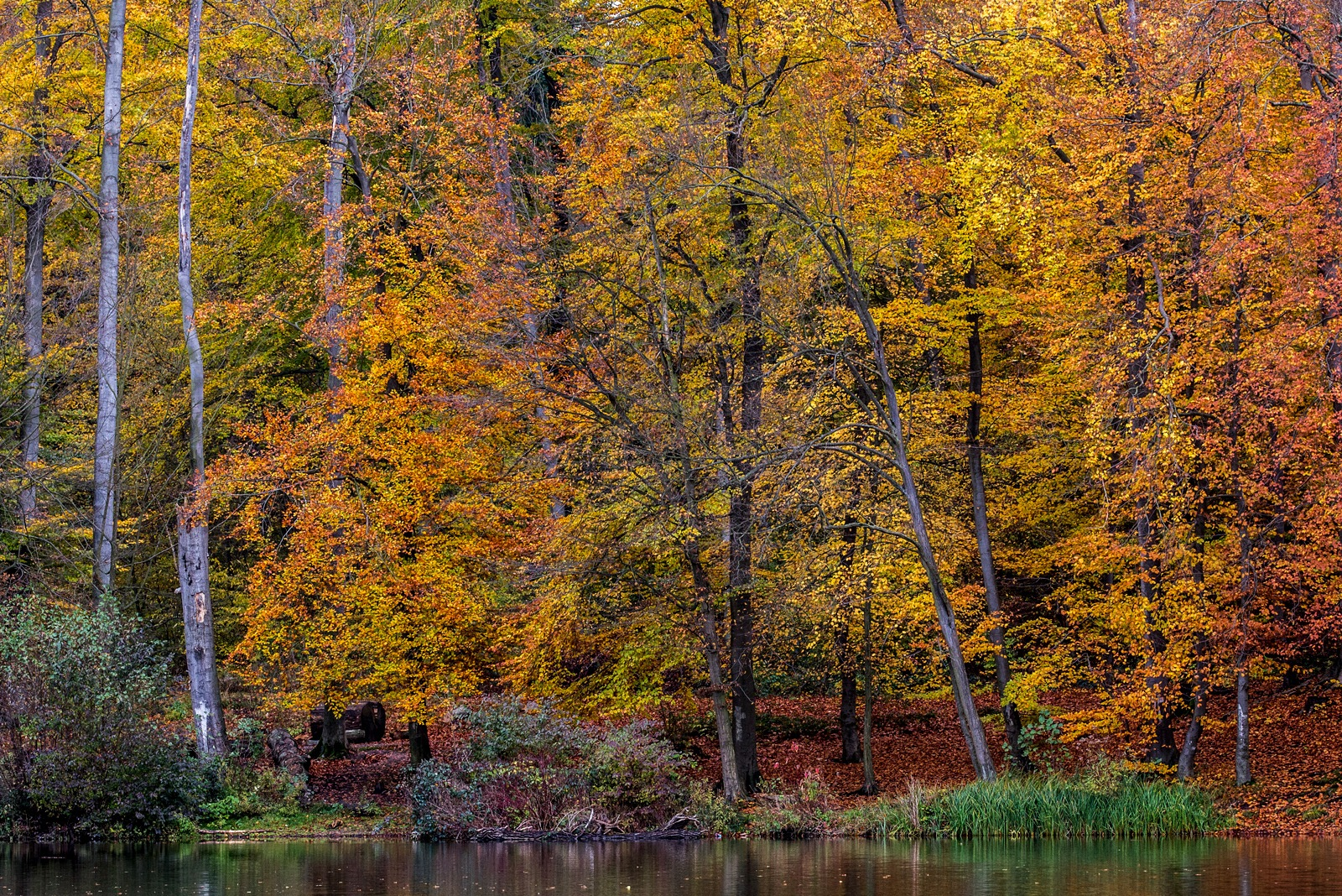 Autumncolours by karlvock